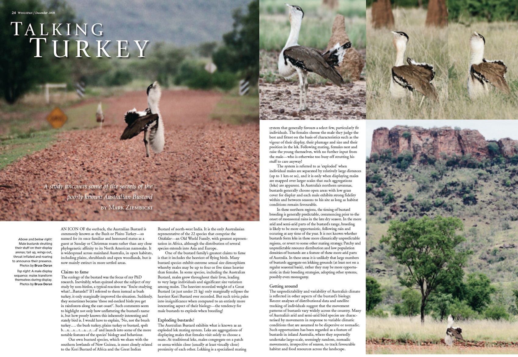 Article in Wingspan Dec 2008, including photos by Bruce Doran