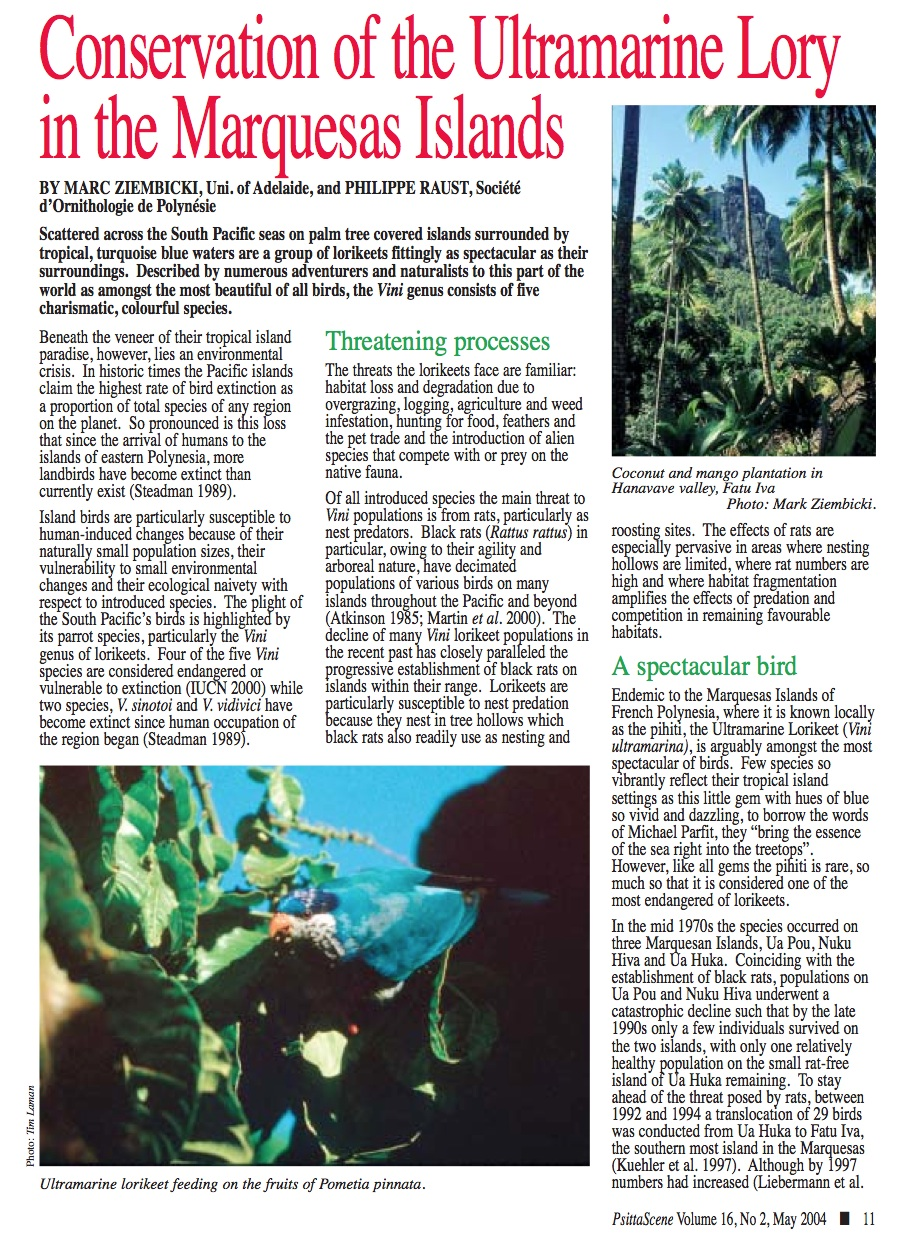 Article on the  conservation of the Ultramarine Lorikeet in Psittascene (May 2004) . With additional photos by  Tim Laman  and Rosemary Low