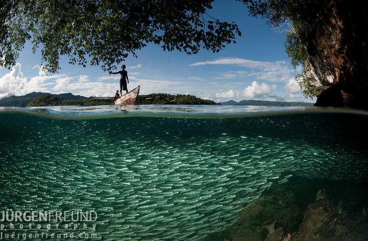 Schooling silversides with fisherman, North Raja Ampat, West Papua (Jurgen Freund)