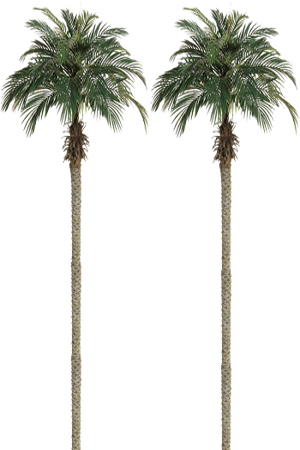 Palm Trees    Free standing   Available in the following sizes -   Small Palms – 180cm (These can also be used as table centres)    Medium Palms – 270cm    Large Palms – 350cm    NB - Heights will vary slightly depending on how fronds are displayed