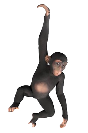 Life sized 3D Chimp
