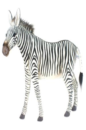 Zebra - Approx – 134cm x 112cm x 36cm
