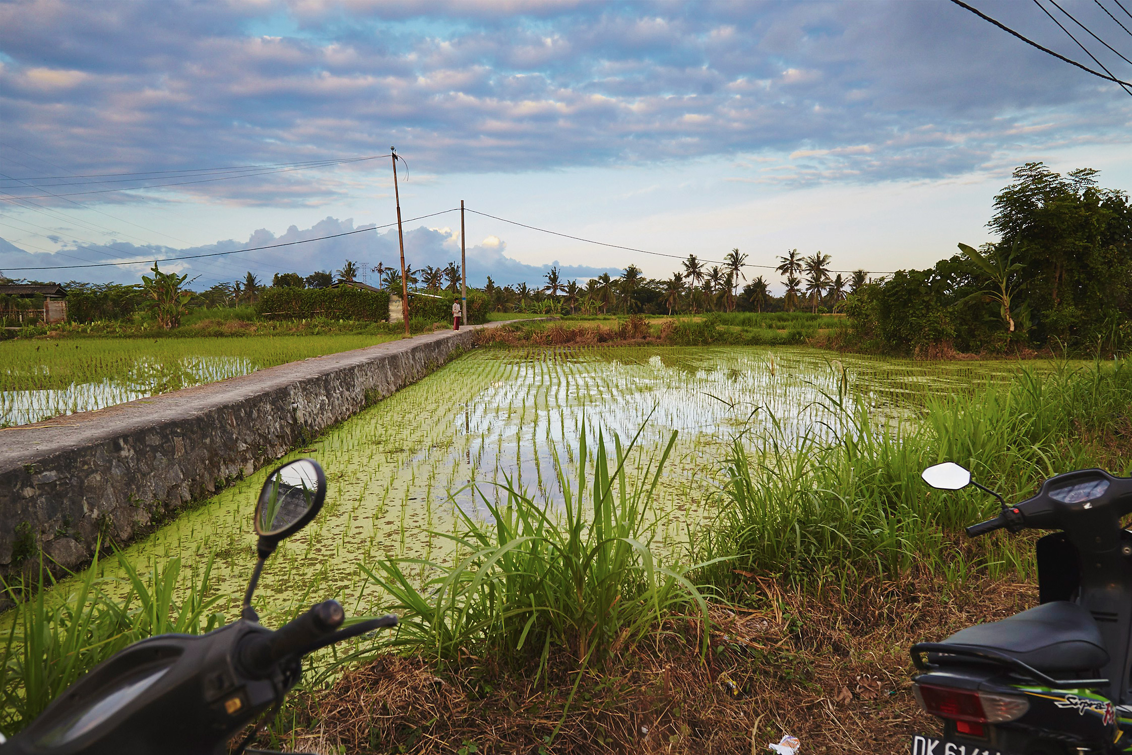 My first look at a Bali rice field