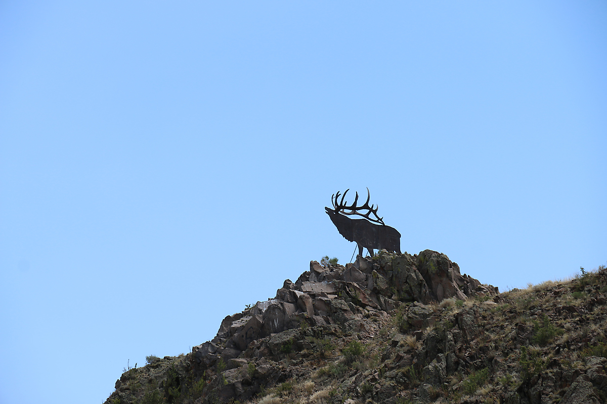 The famous Del Norte elk