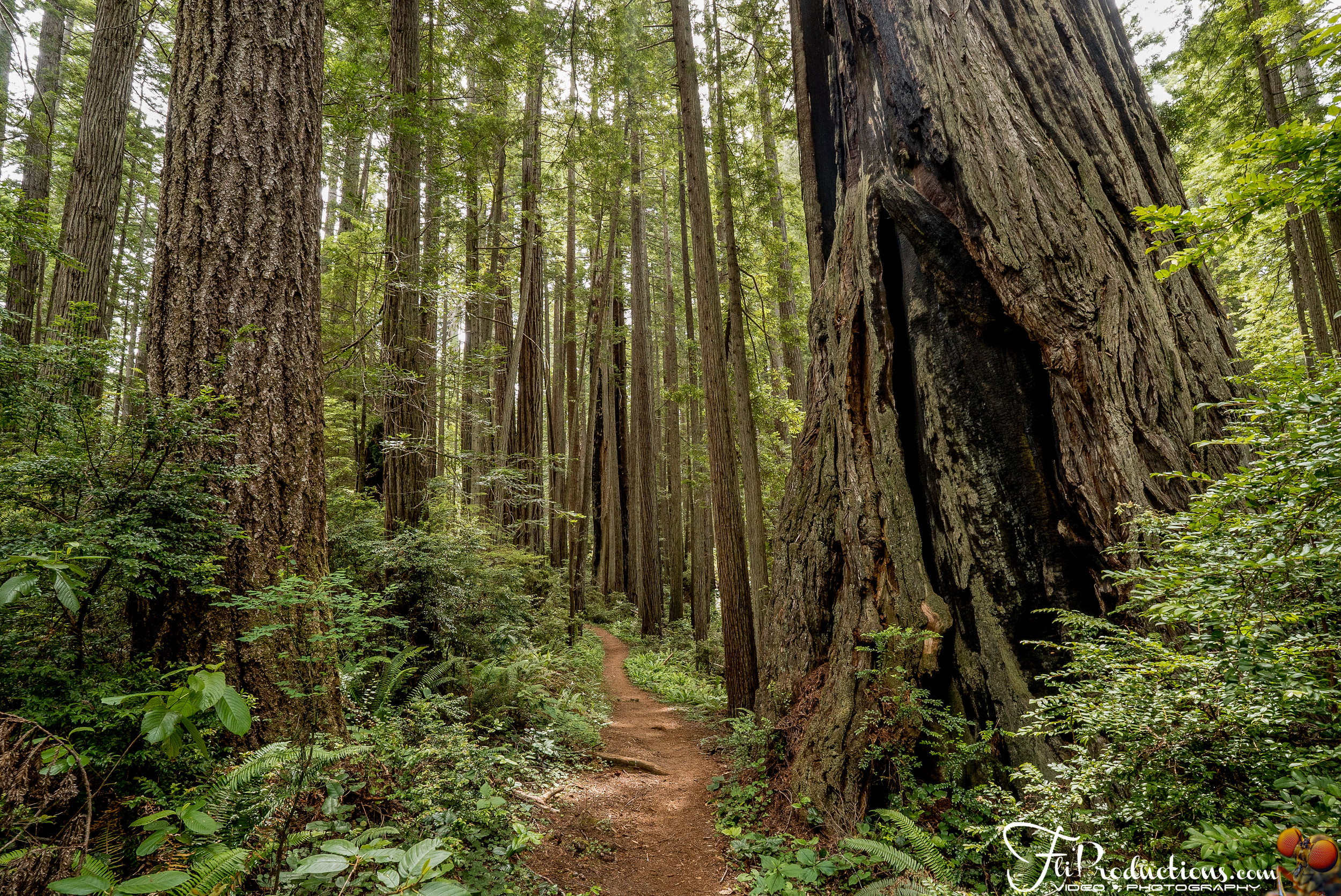 Miners Ridge Trail - Prairie Creek Redwoods State Park Californi
