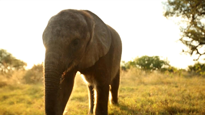 Elephant Atlas