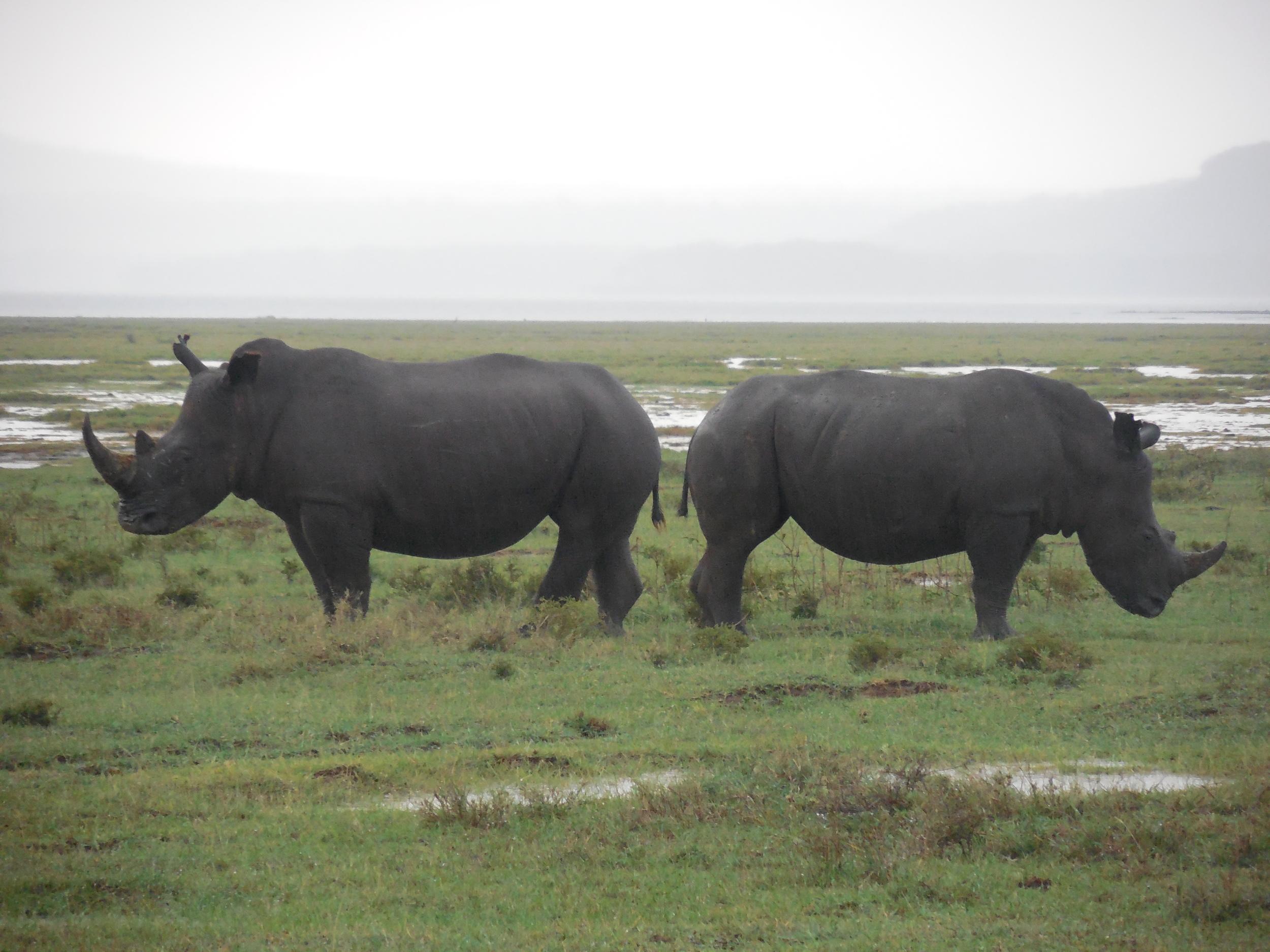Lake Naivasha Kenya May 2014 © Flyga Twiga LLC