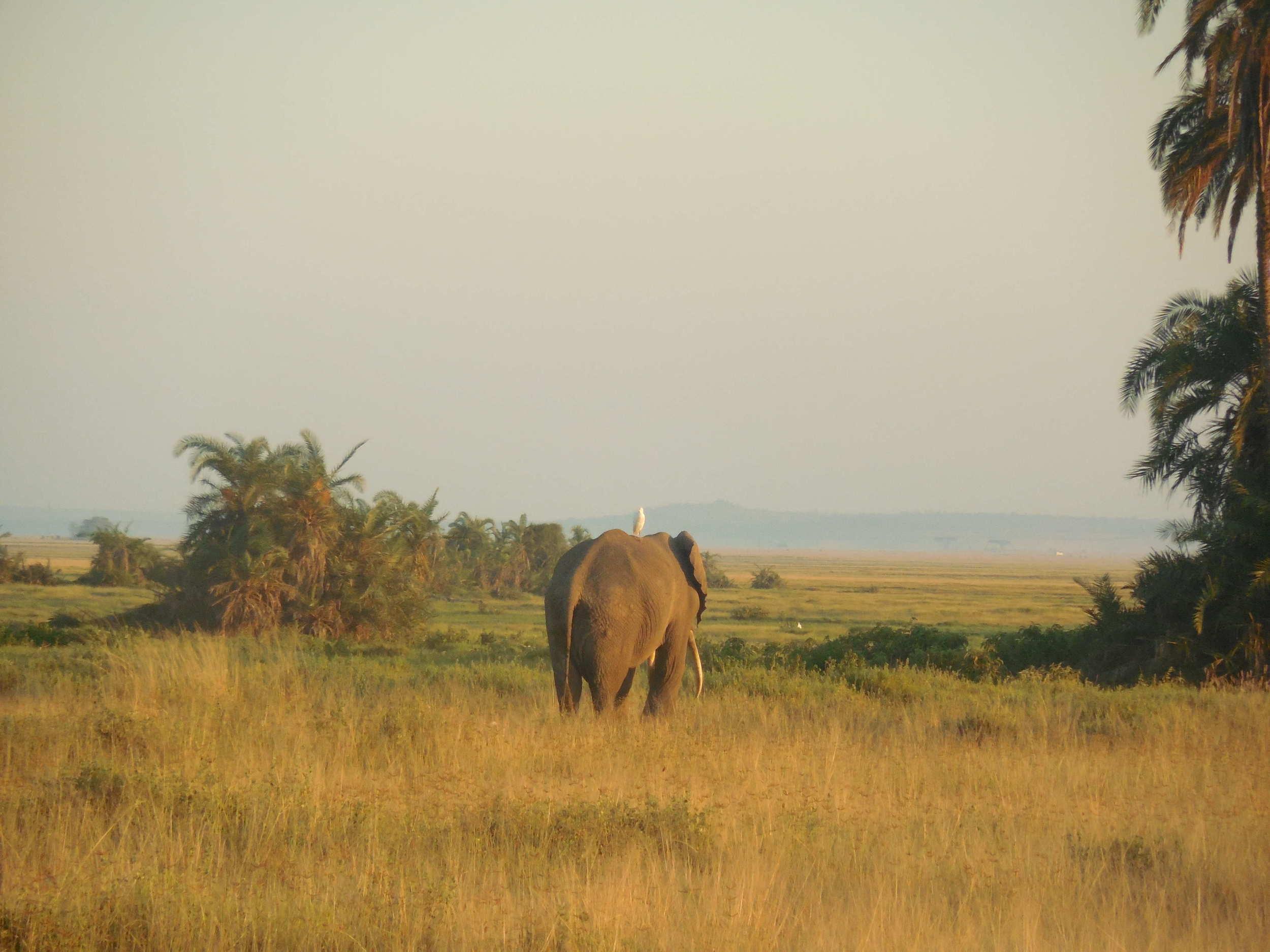 Amboseli National Park Kenya 2014 © Flyga Twiga LLC