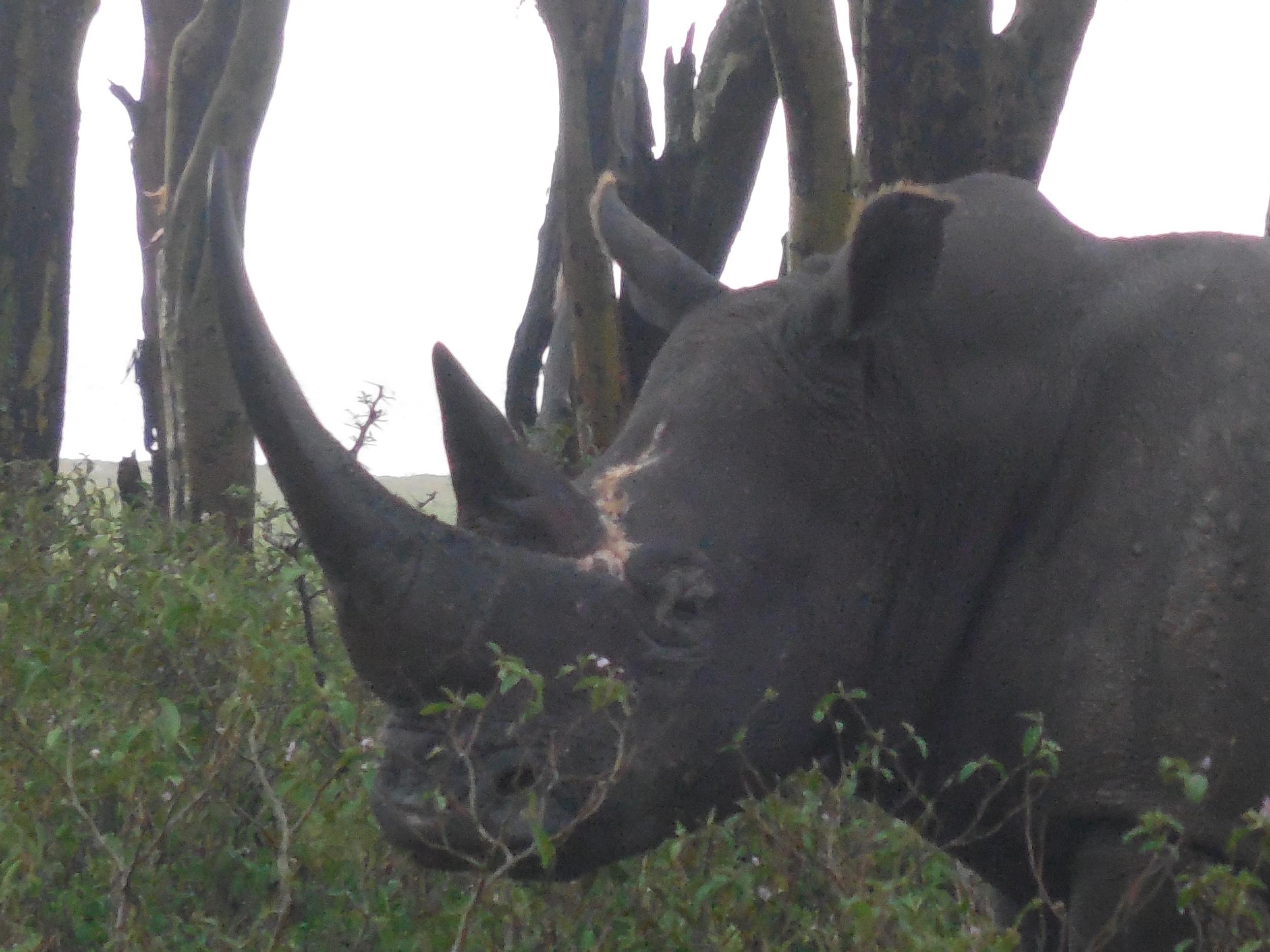 Rhino at Lake Naivasha Kenya 2014 © Flyga Twiga LLC