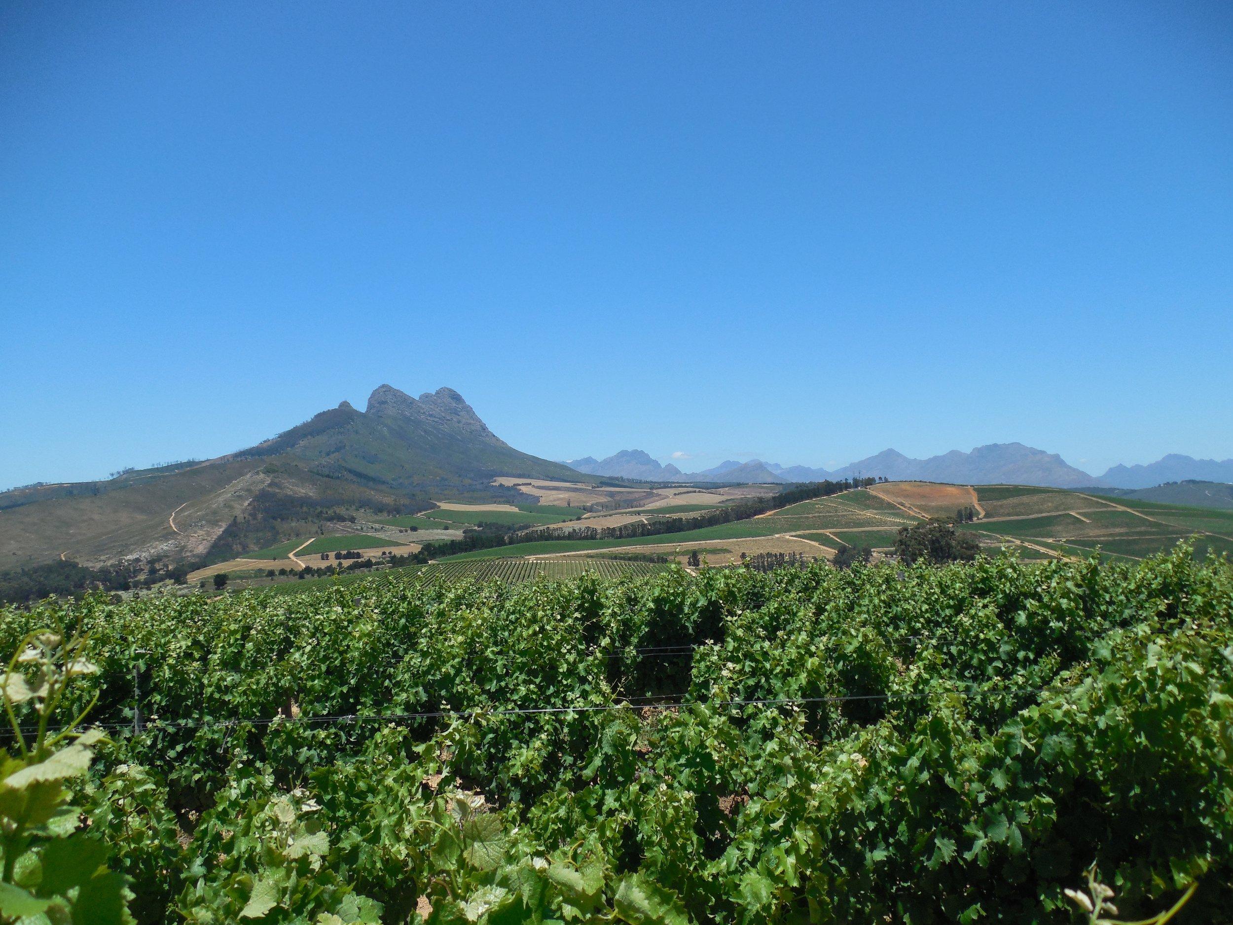 Stellenbosch South Africa December 2018 © Flyga Twiga LLC