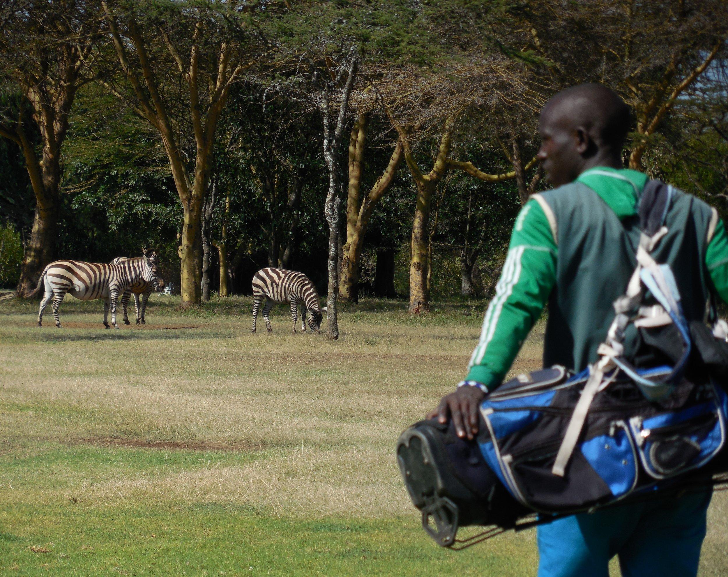 Playing Golf with Zebras Great Rift Valley Lodge & Golf Resort, Kenya © Flyga Twiga LLC