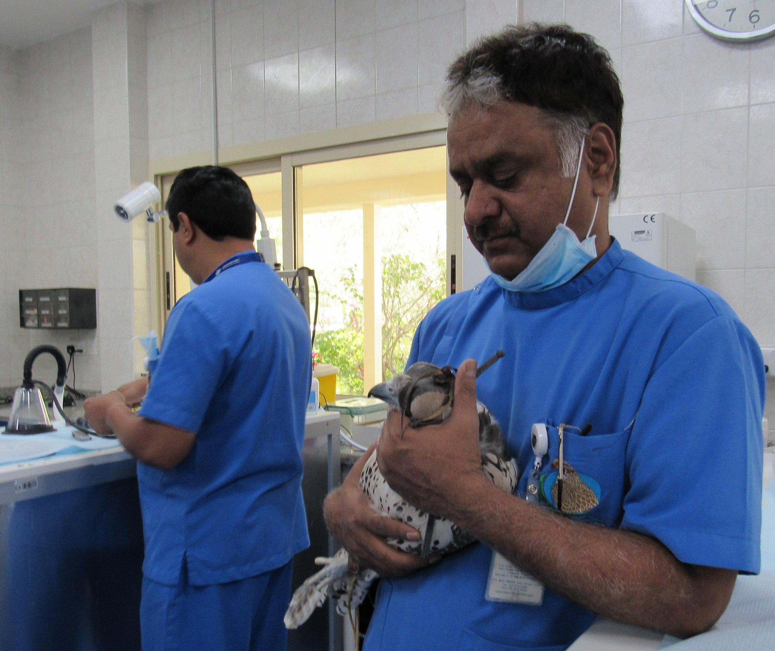 Abu Dhabi Falcon Hospital © Flyga Twiga LLC