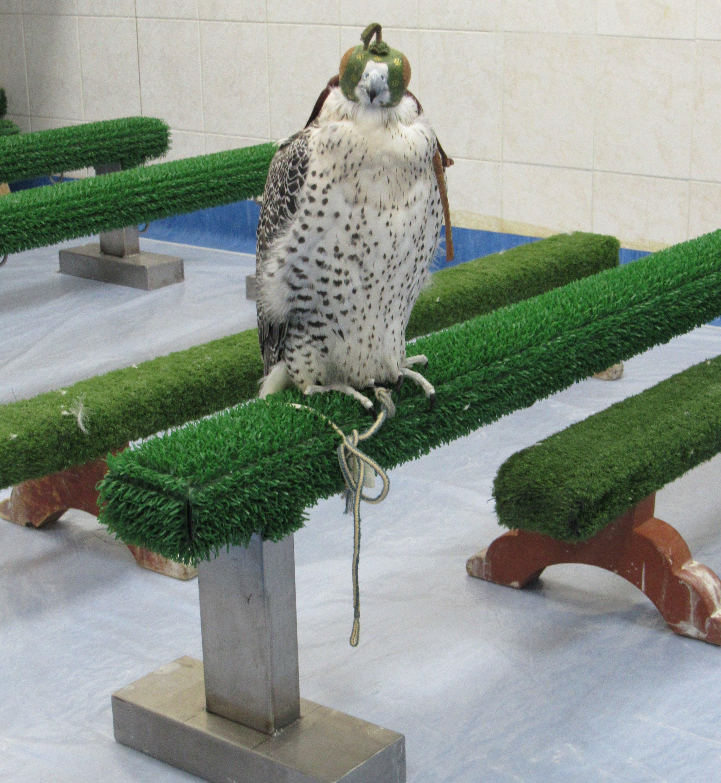 Falcon Abu Dhabi Falcon Hospital © Flyga Twiga LLC