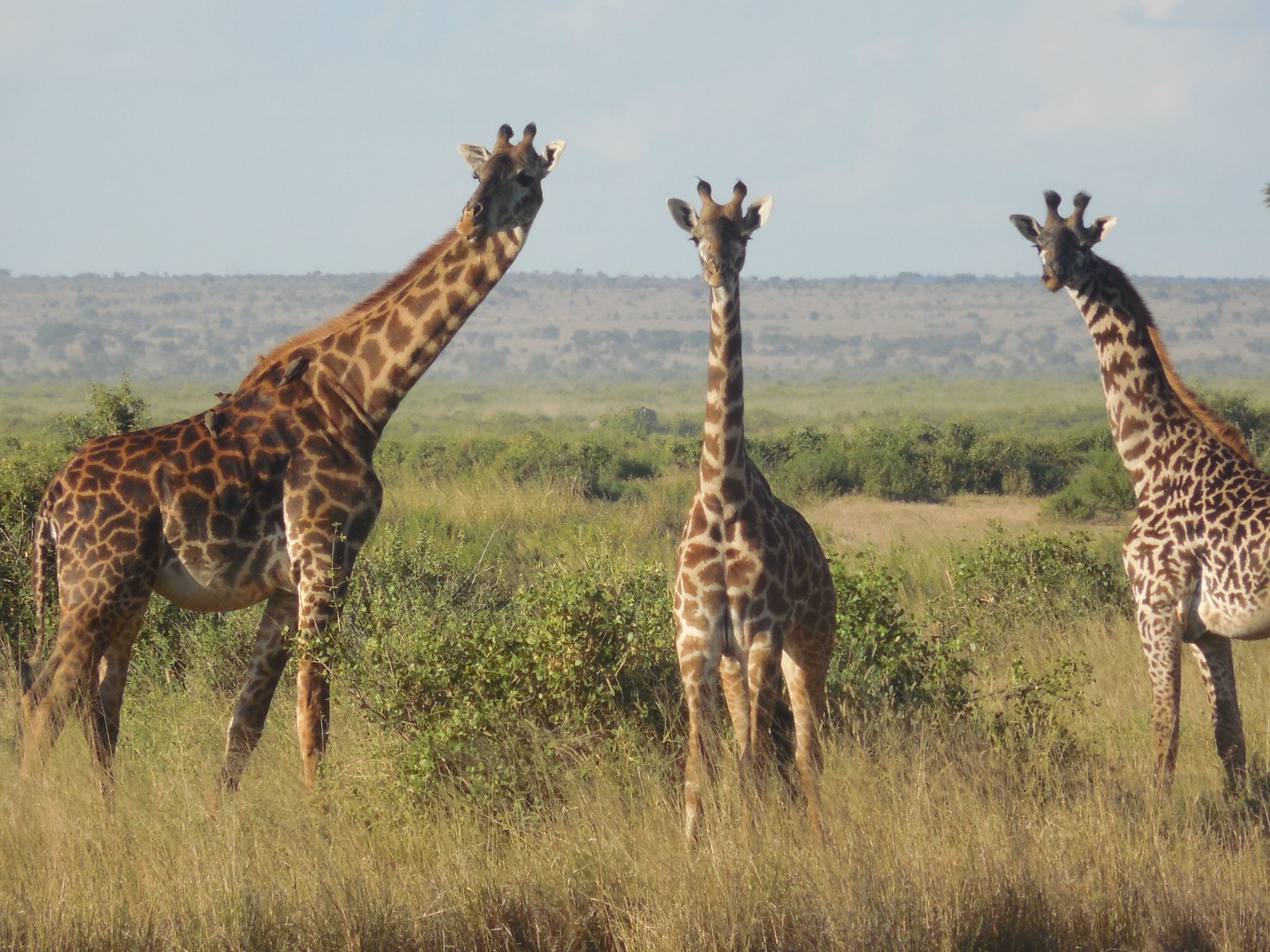 Twiga Kenya © Flyga Twiga LLC