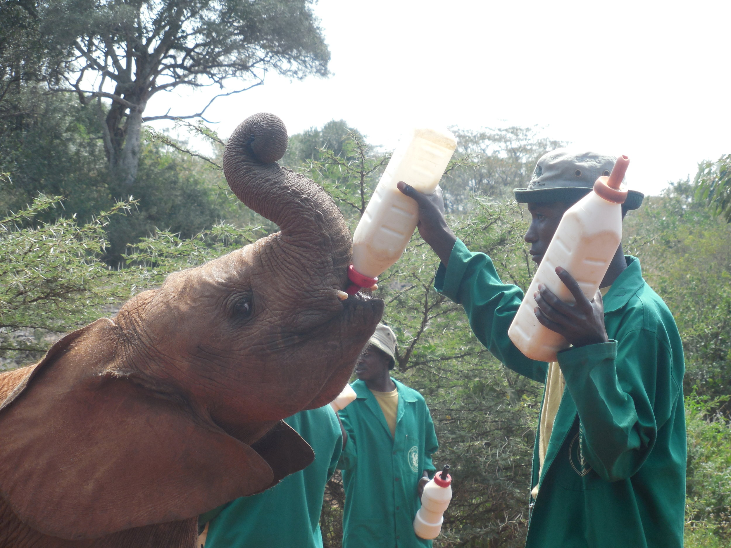 David Sheldrick Elephant Orphanage ©Flyga Twiga LLC
