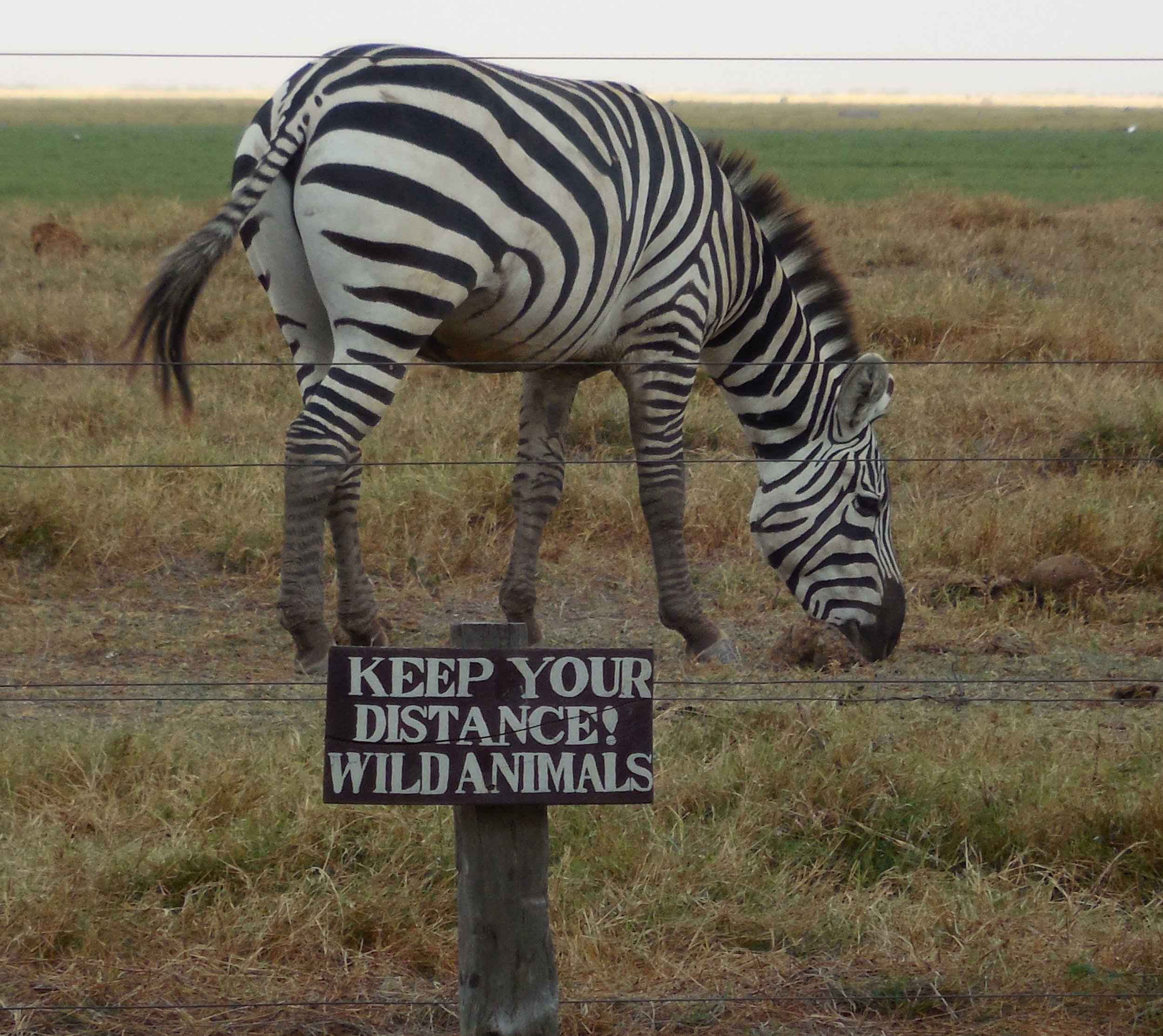 Zebra Wildlife Warning Sign ©Flyga Twiga LLC