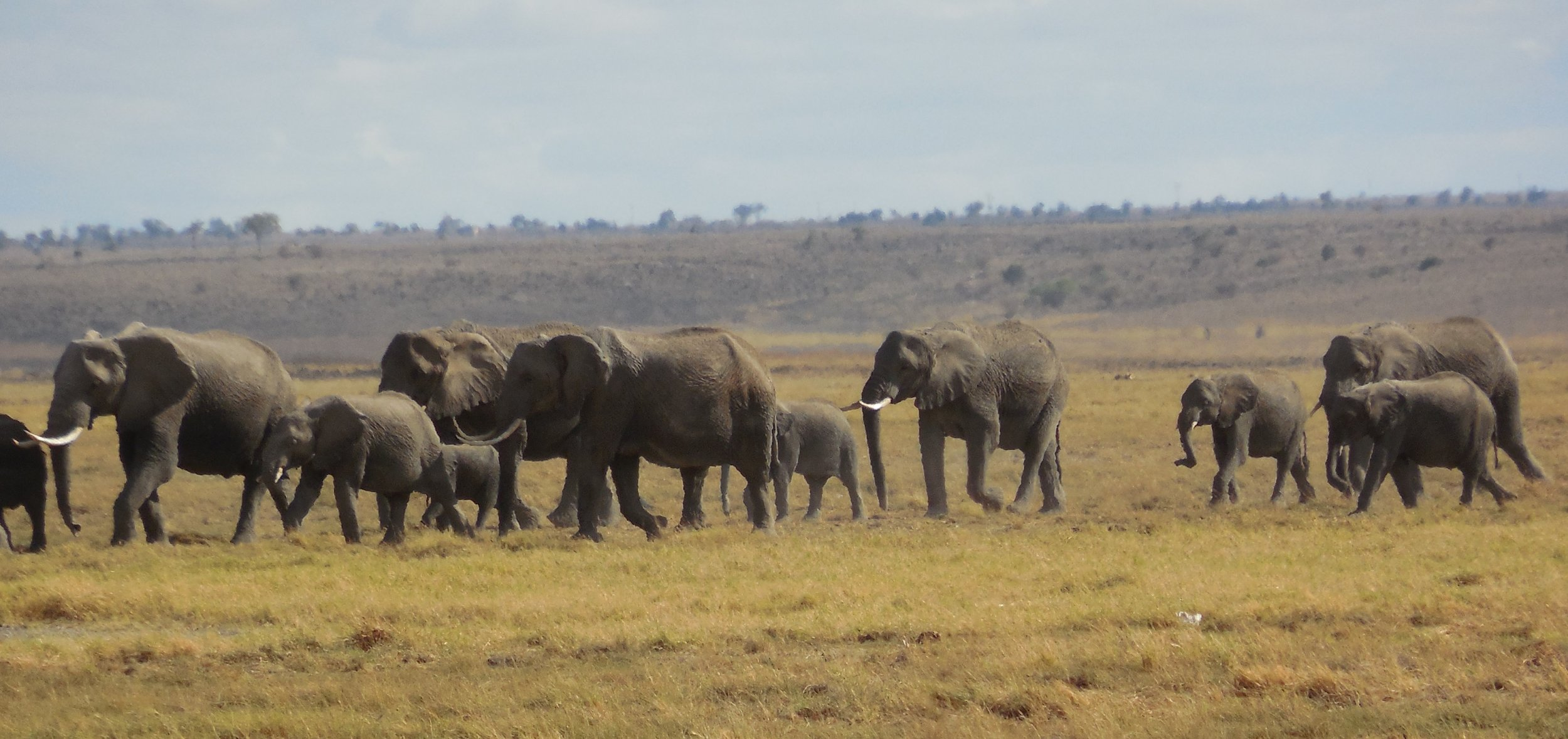 Amboseli Elephants, Kenya ©Flyga Twiga LLC
