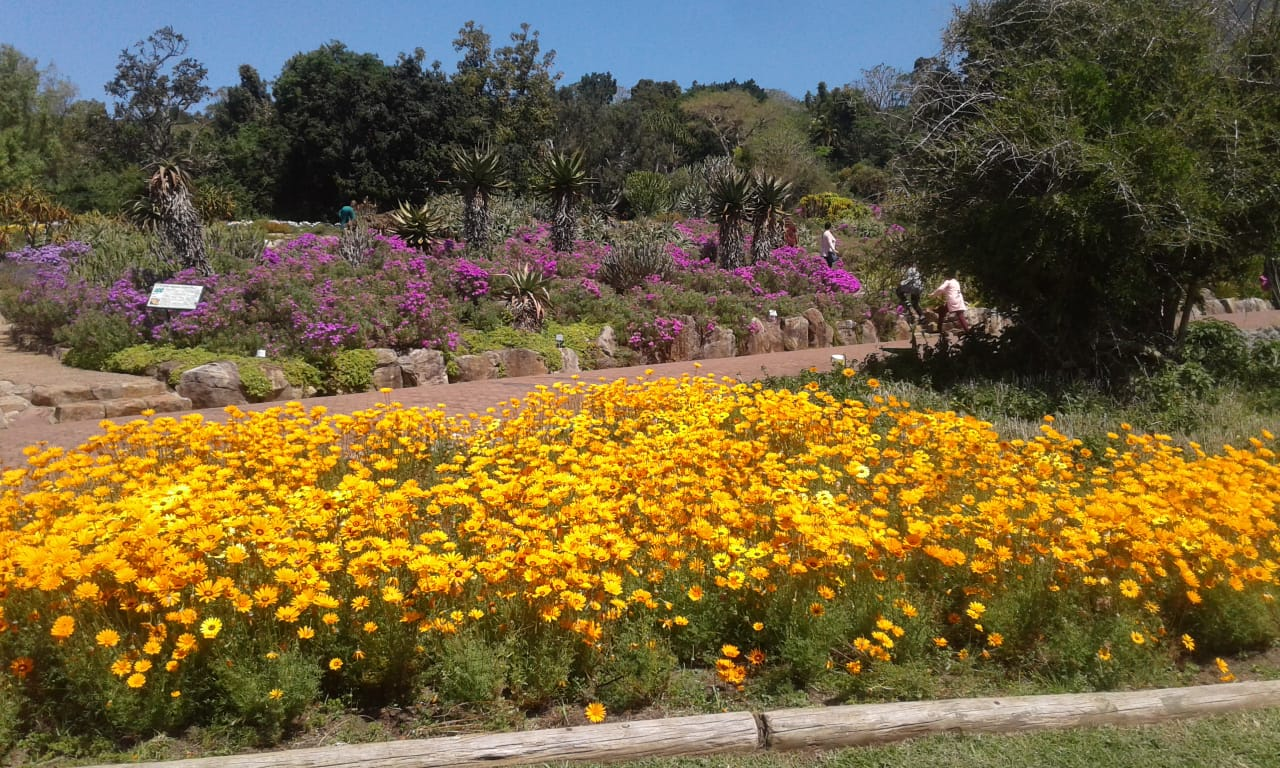 Kirstenbosch National Botanical Gardens ©Michael English