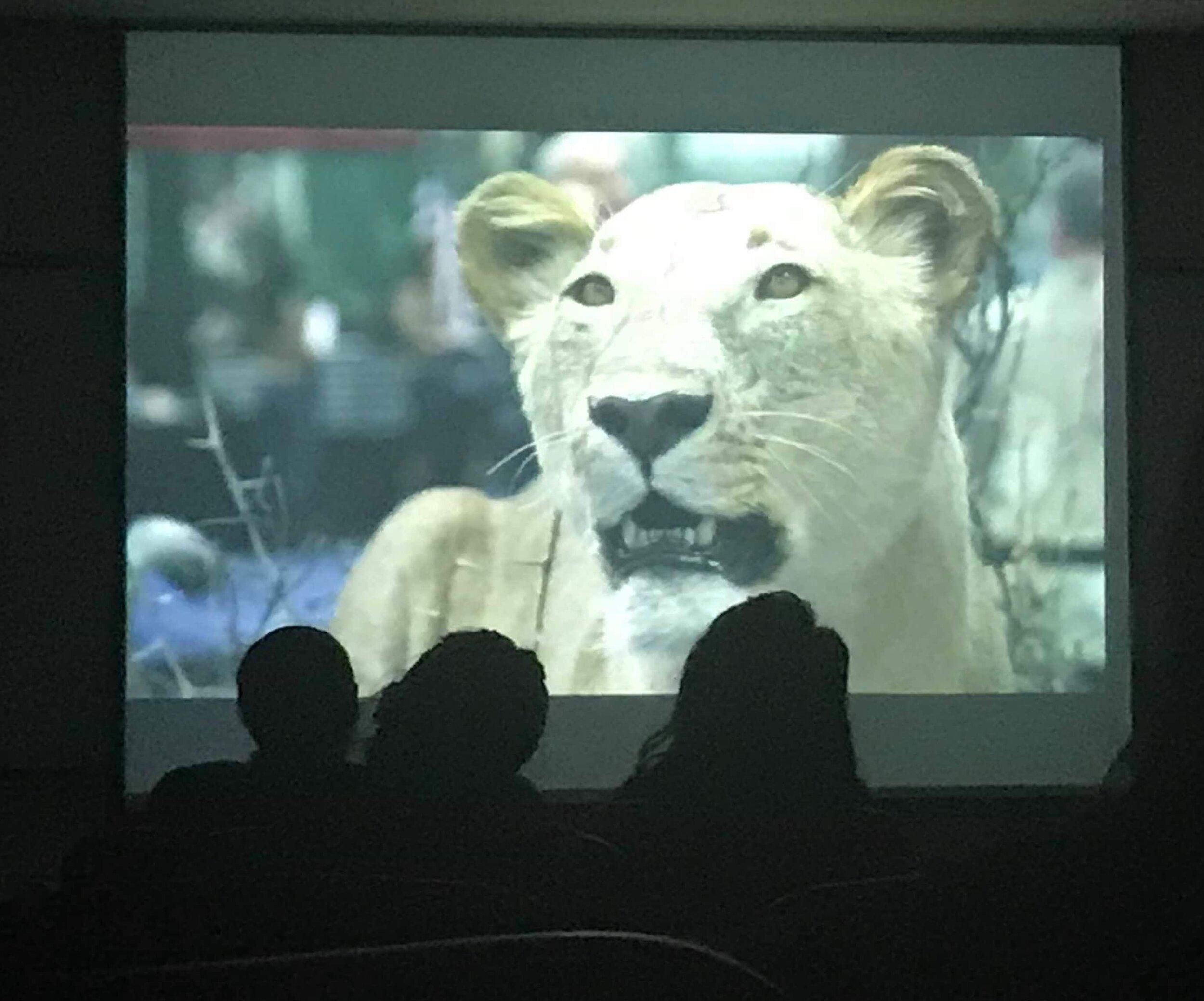 1st South Korea Blood Lions Screening.jpg