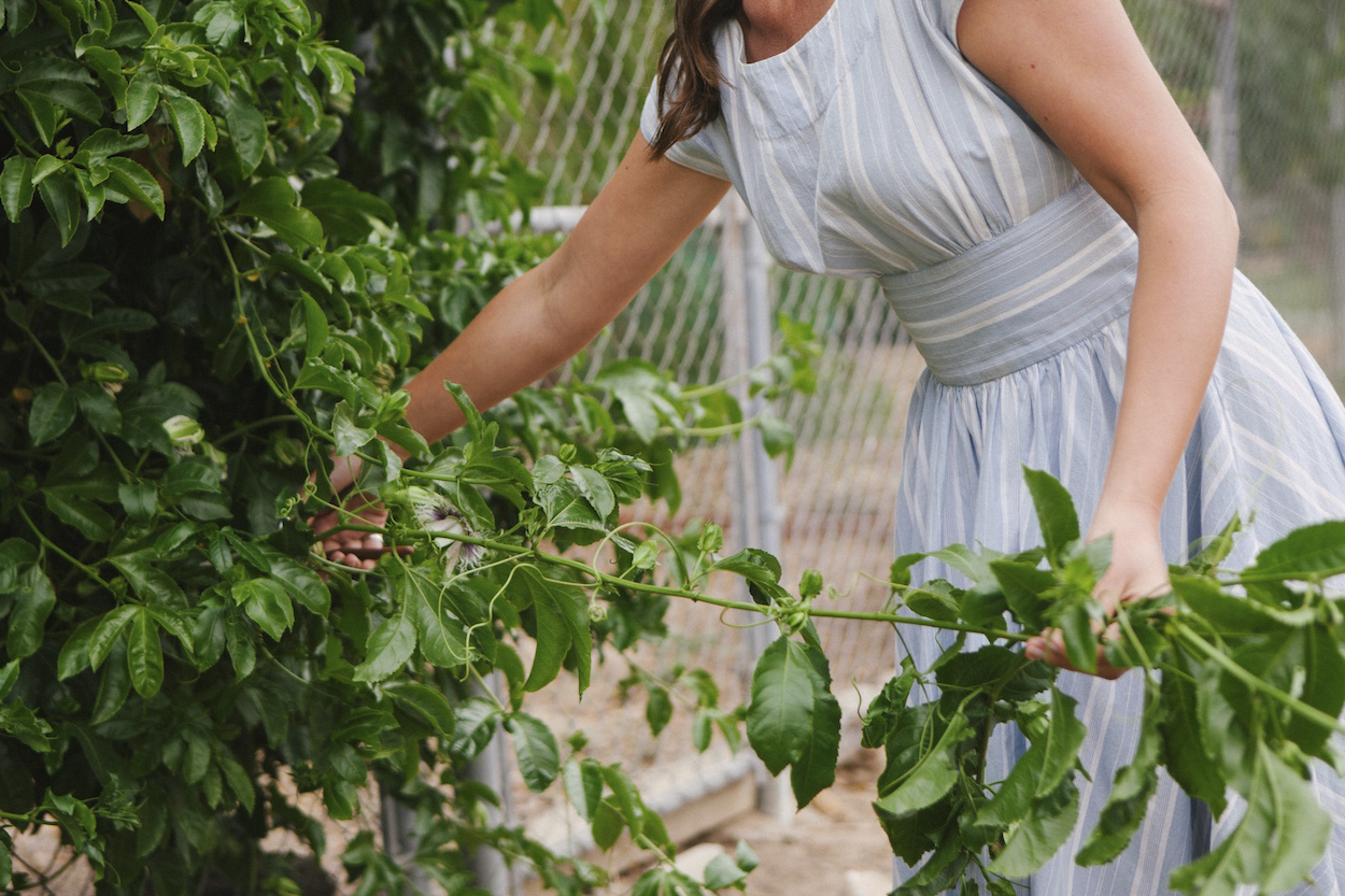 Compass Floral passion fruit garden. Photography by Ashley Williams.