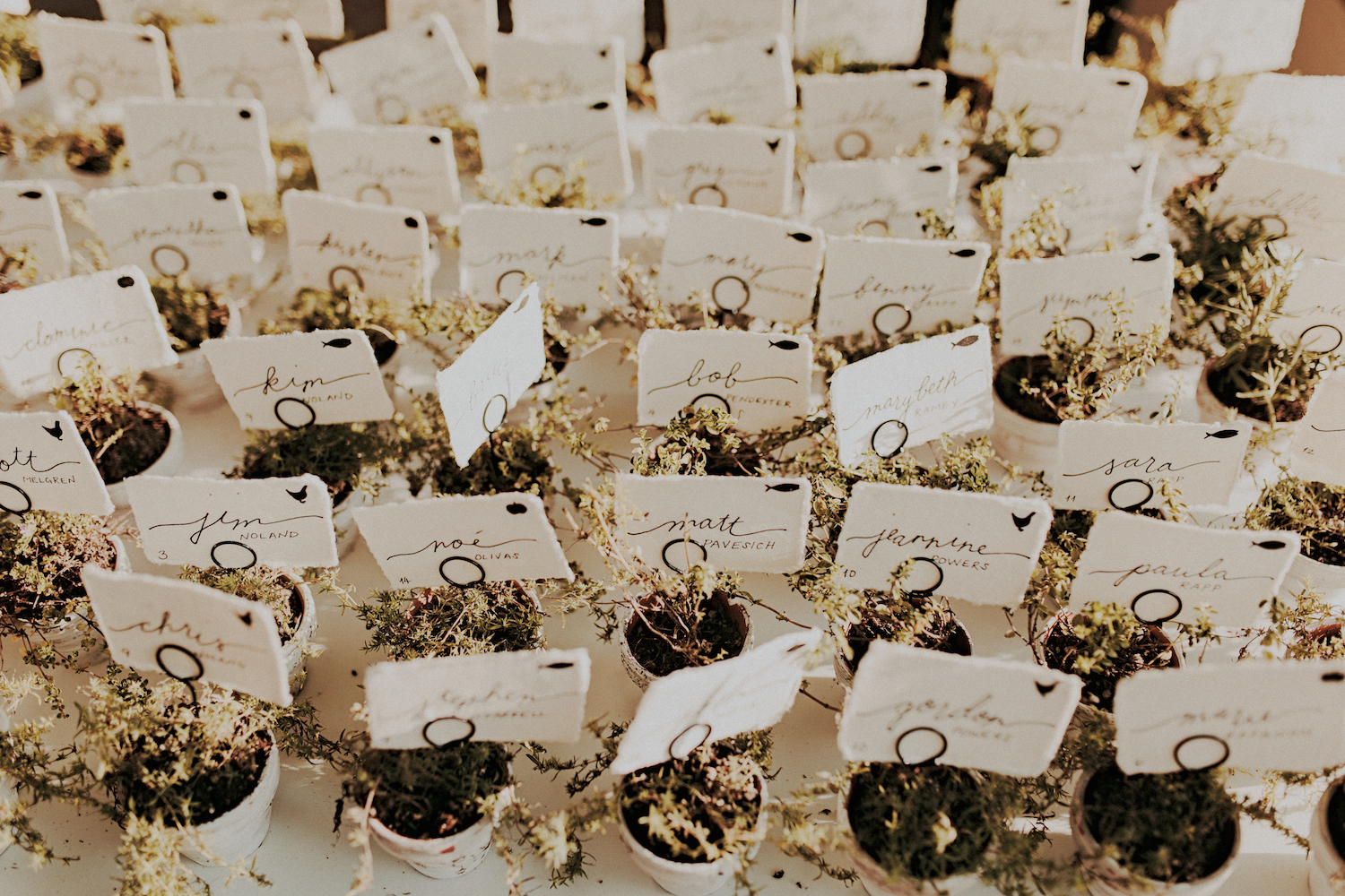 Potted herb escort cards.