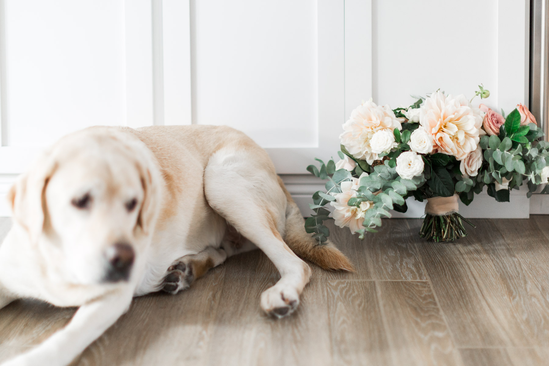 Fun engagement shoot including dogs and elegant dahlia and rose bridal bouquet | Newport Beach, CA | Compass Floral | Wedding Florist in San Diego and Southern California | Cavin Elizabeth Photography