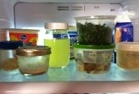 fridge shelf 1.JPG