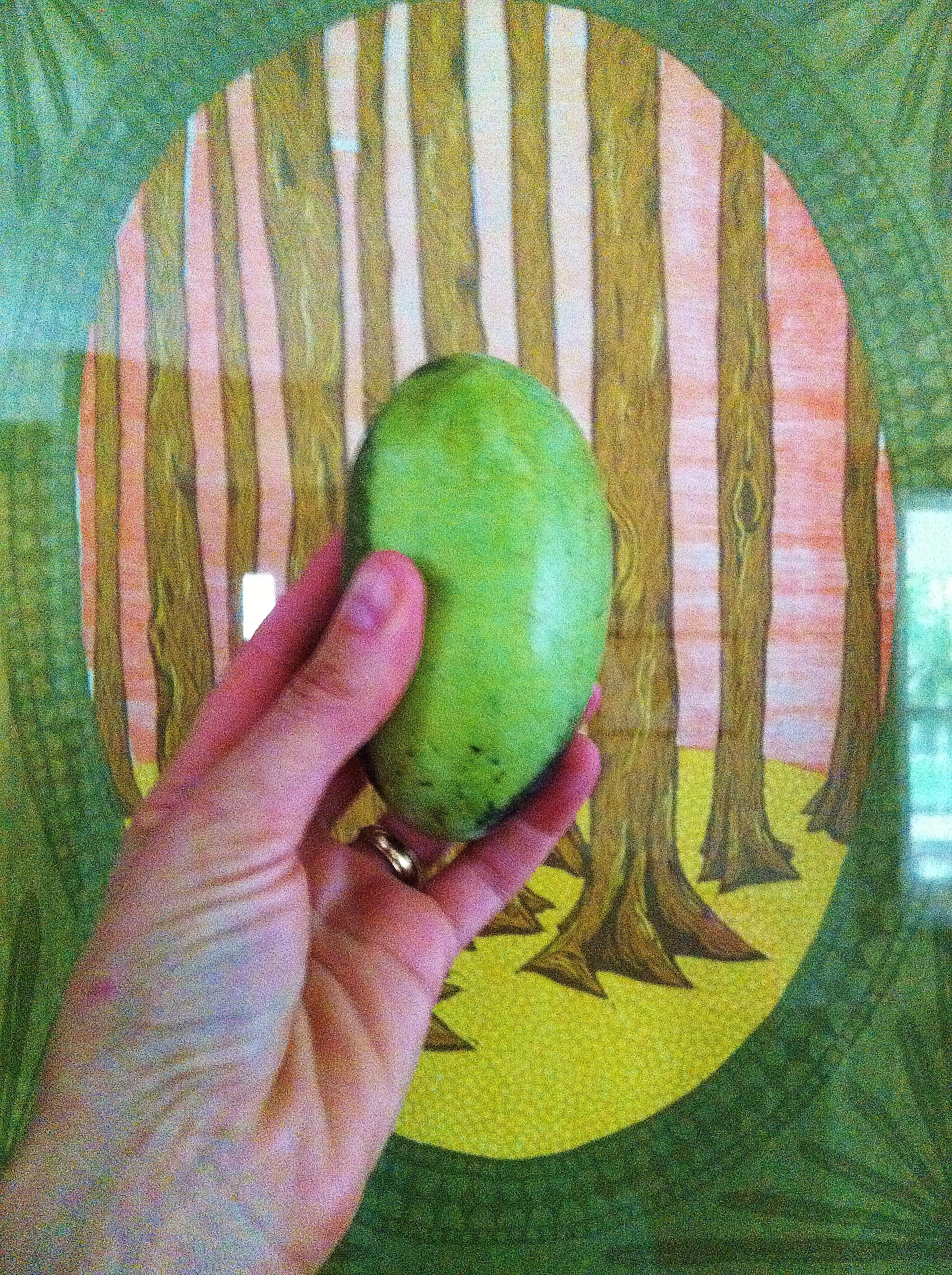 It may not look like much on this screen, but this pawpaw is the centerfold of wild pawpaws.
