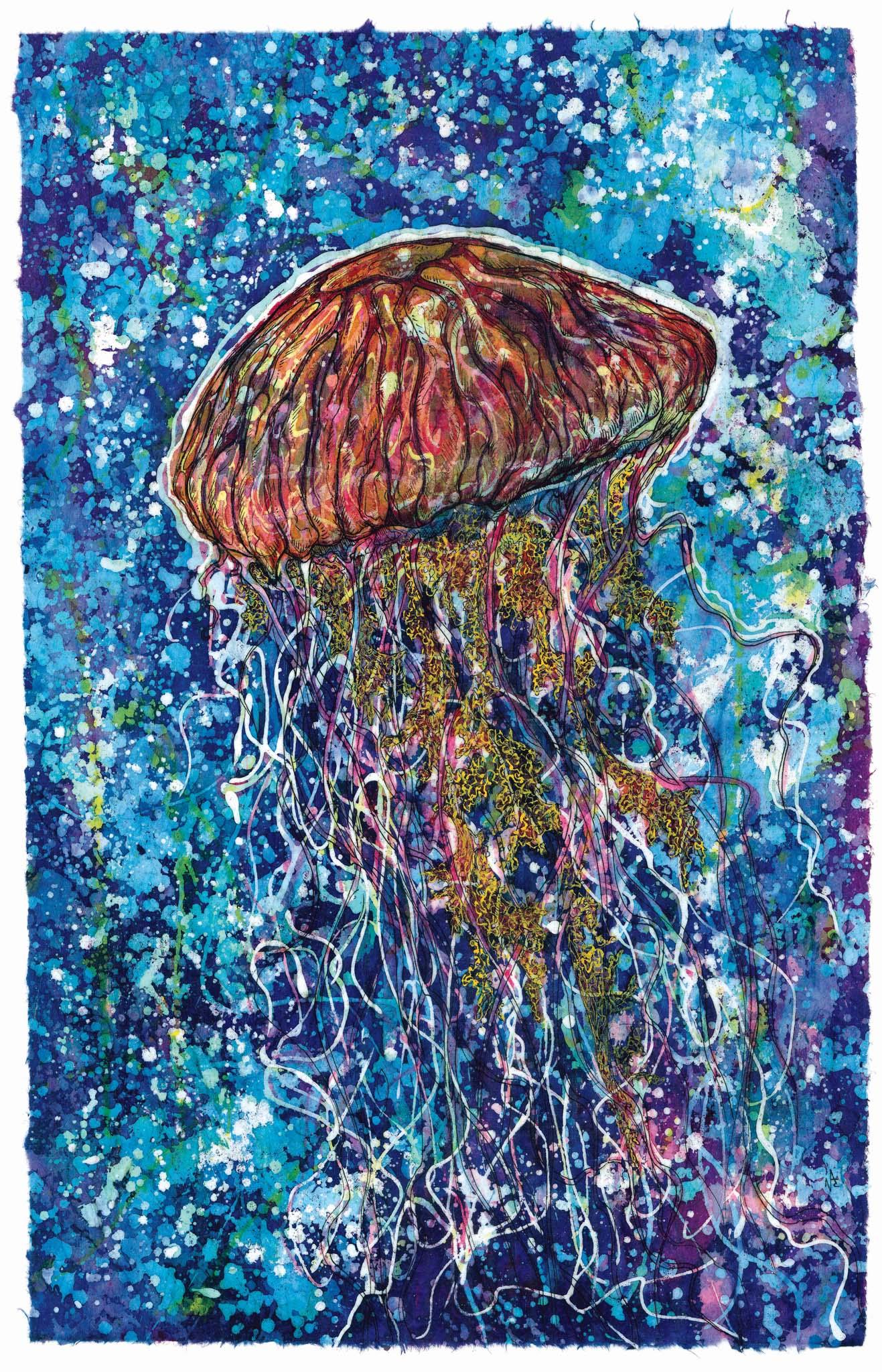 New Jellyfish.jpg