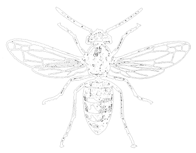 vespiary-wasp.png