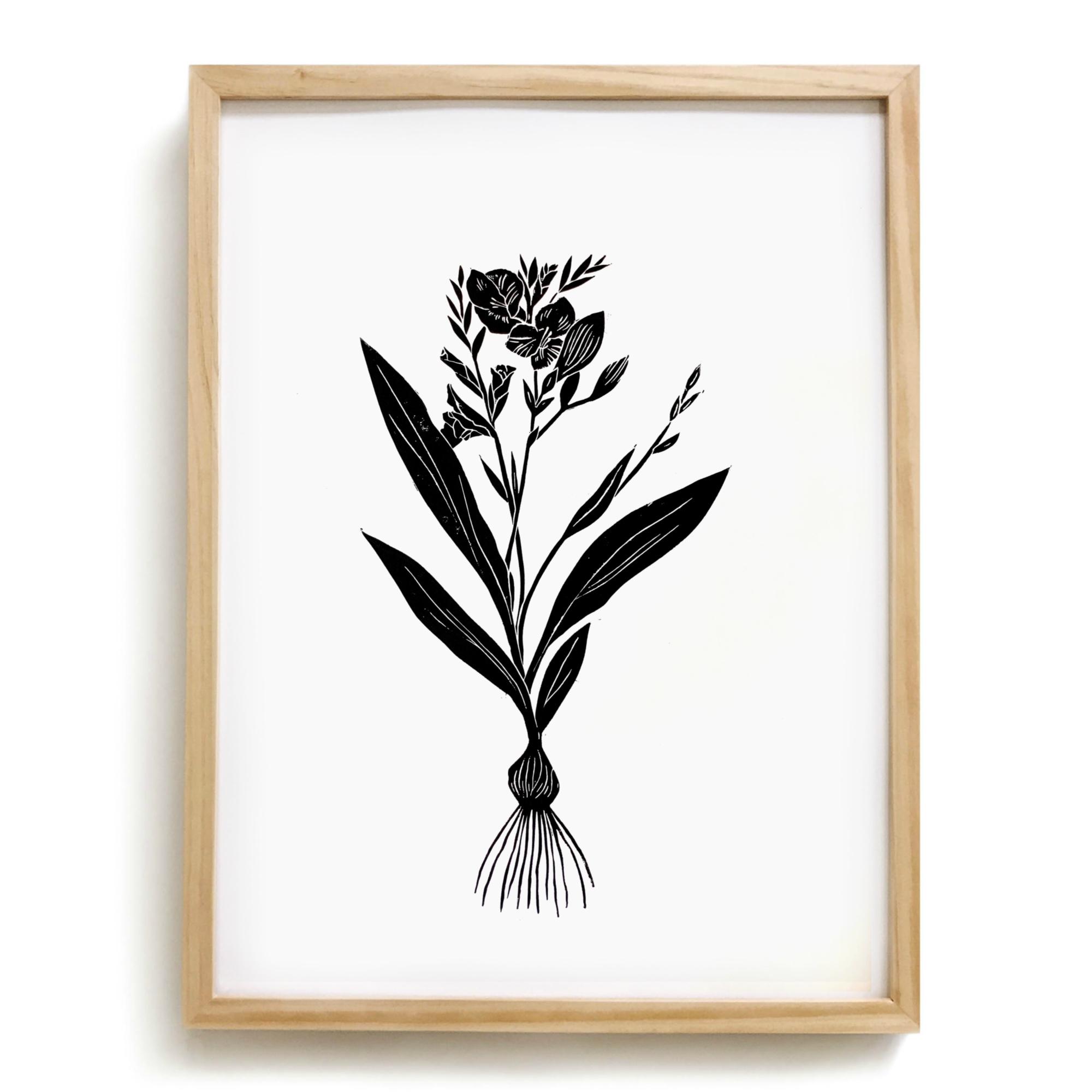 August Gladiolus.jpg