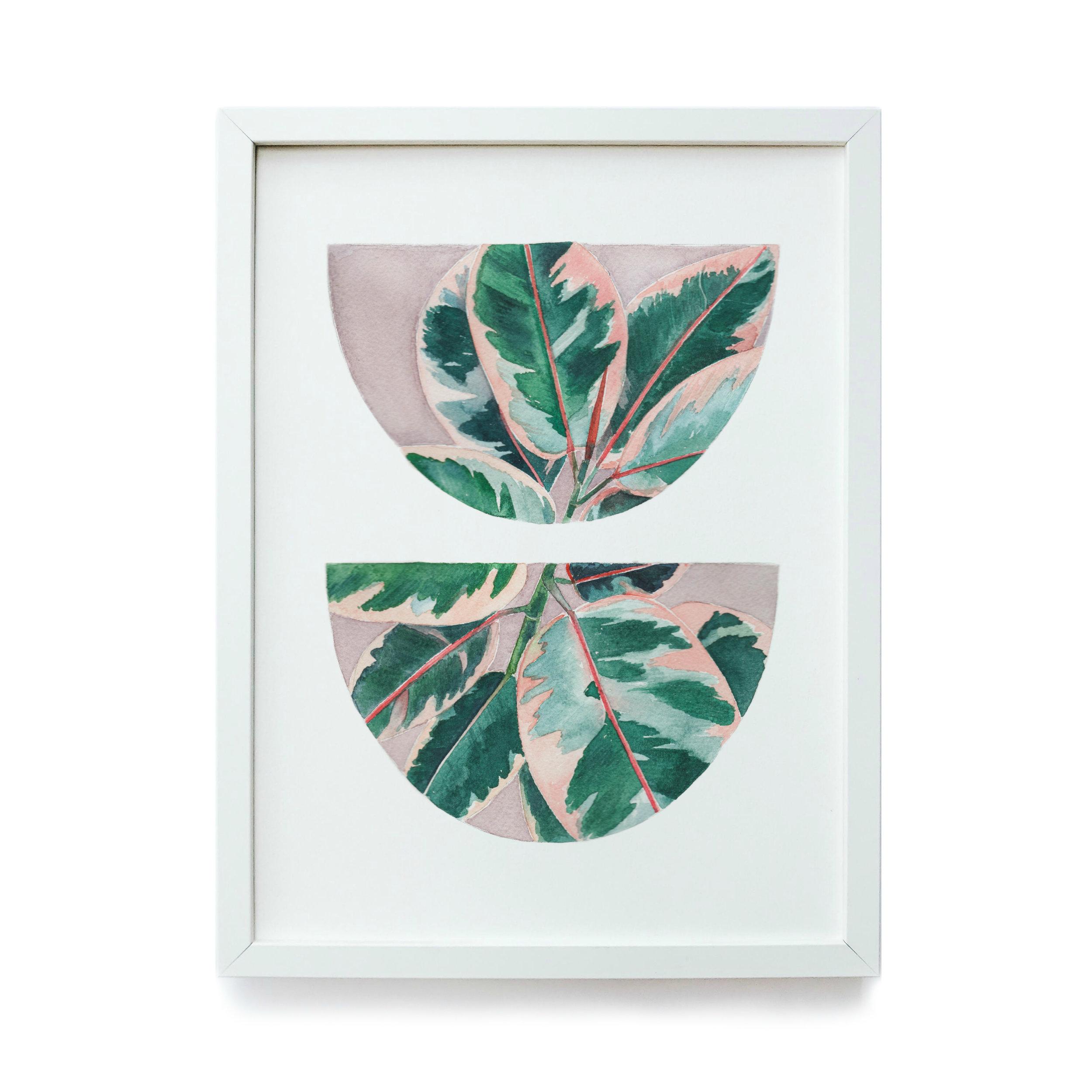 Pink Rubber Tree - Framed.jpg