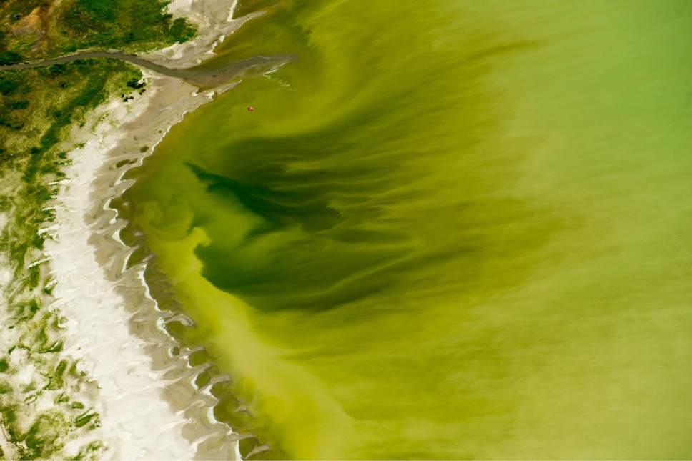Algal blooms in Utah Lake.