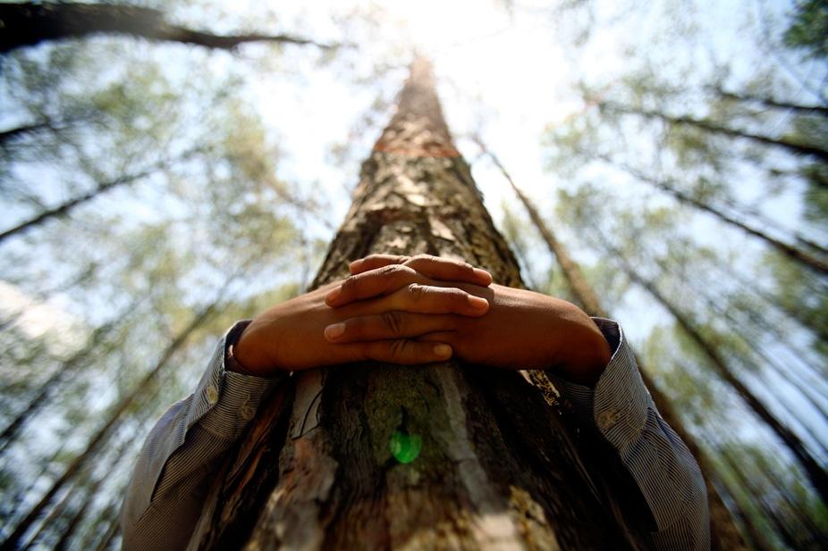 TreehuggingHands.jpg