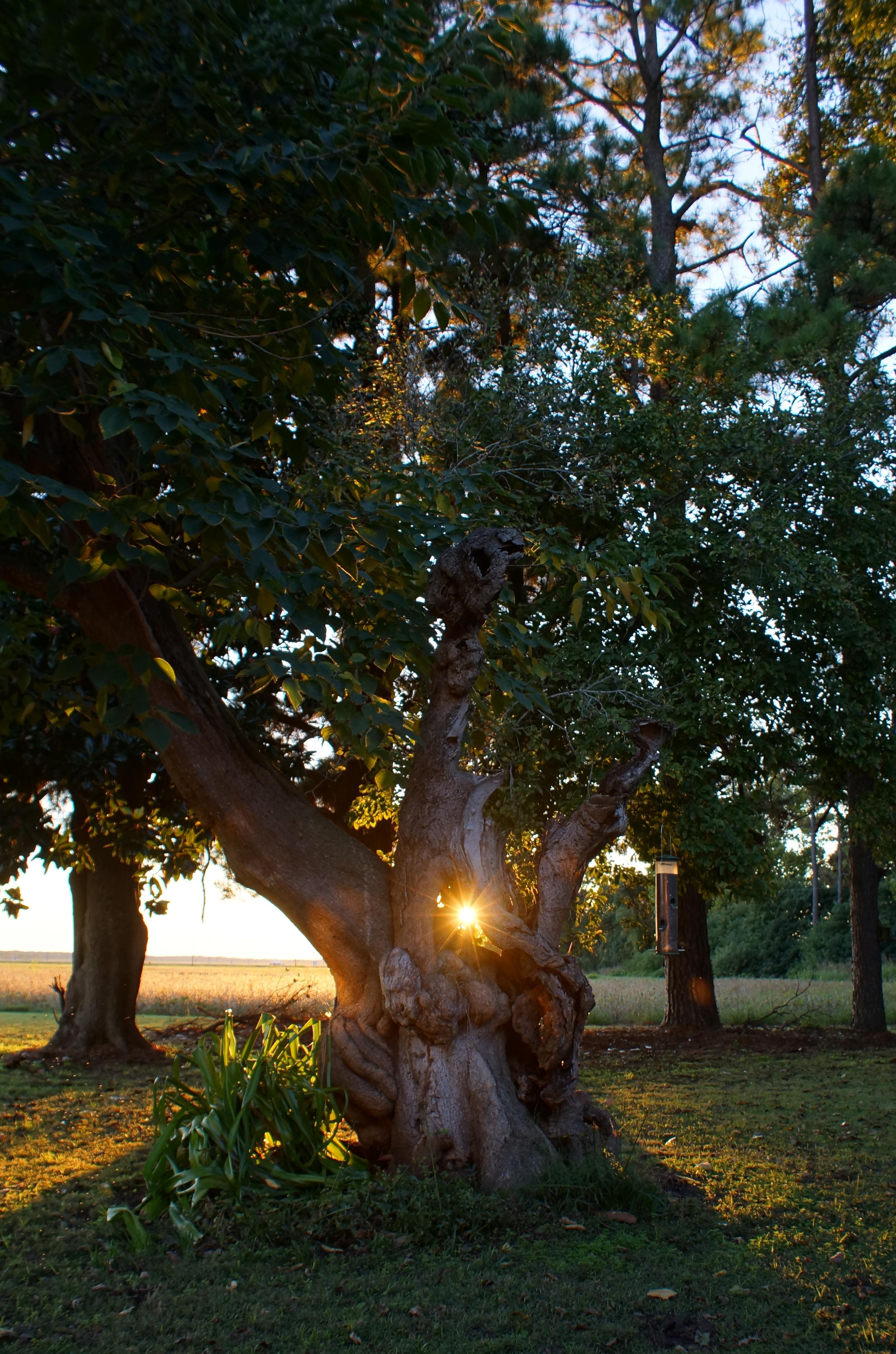 Nancy Abernathy  The Eye of The Tree