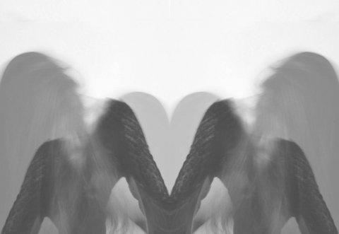 raven_10.jpg