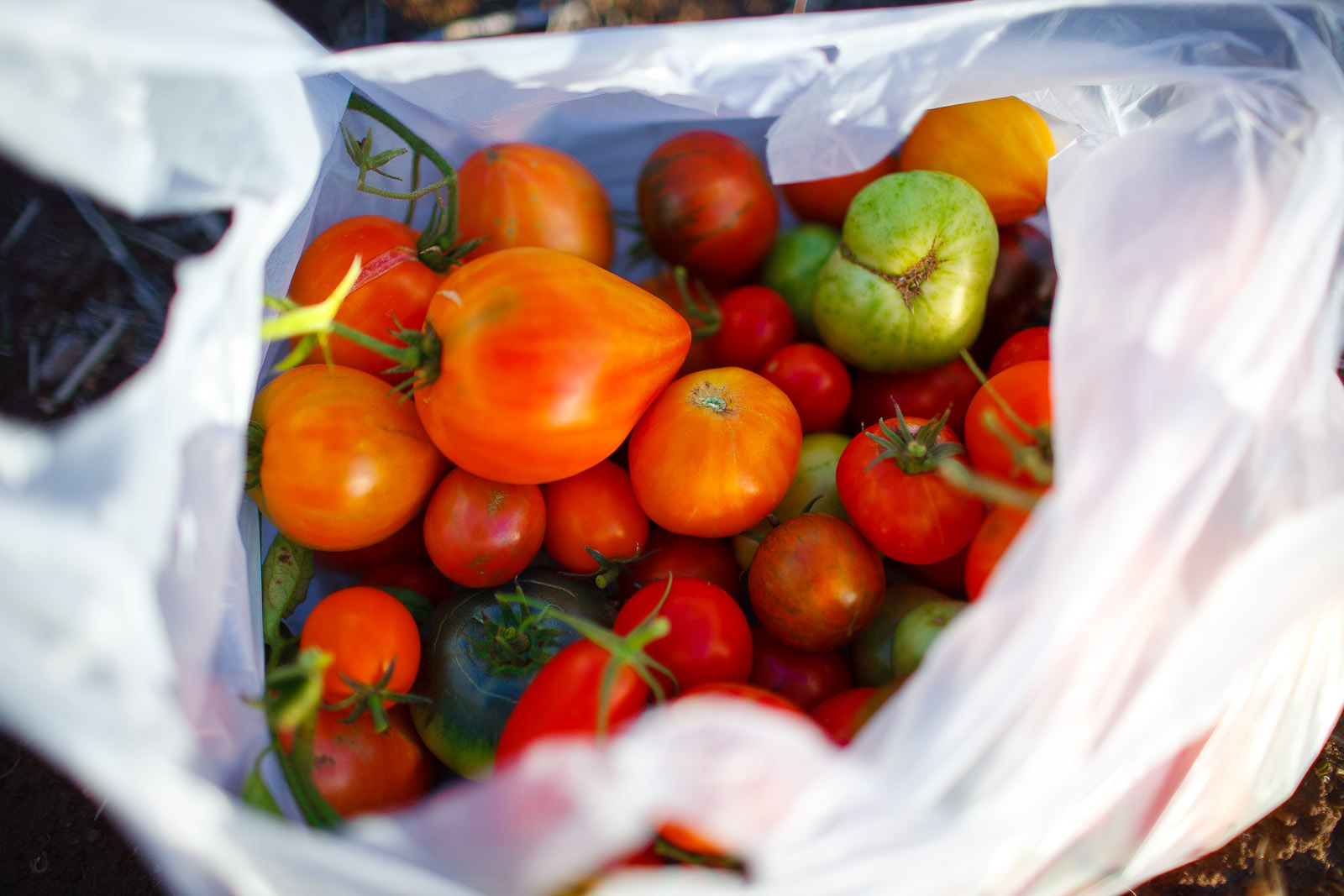 The-French-Laundry-Yountville-California-Tomatoes-in-a-bag-from-the-garden-of-The-French-Laundry.jpg