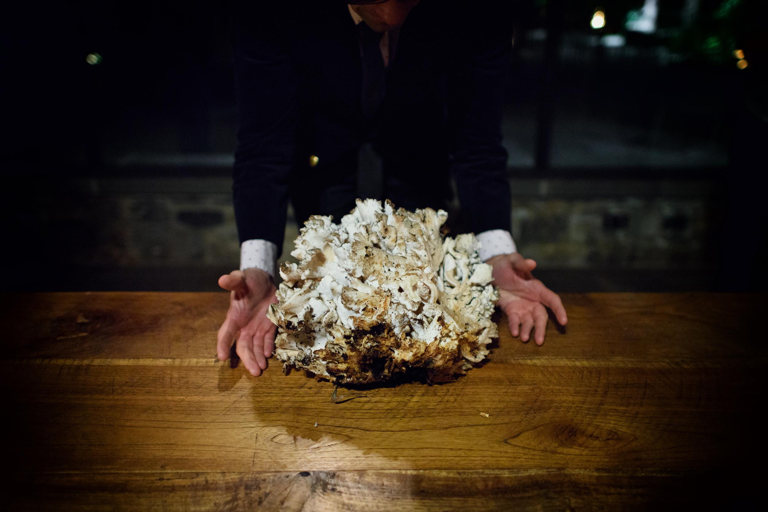 Hen-of-the-woods mushroom