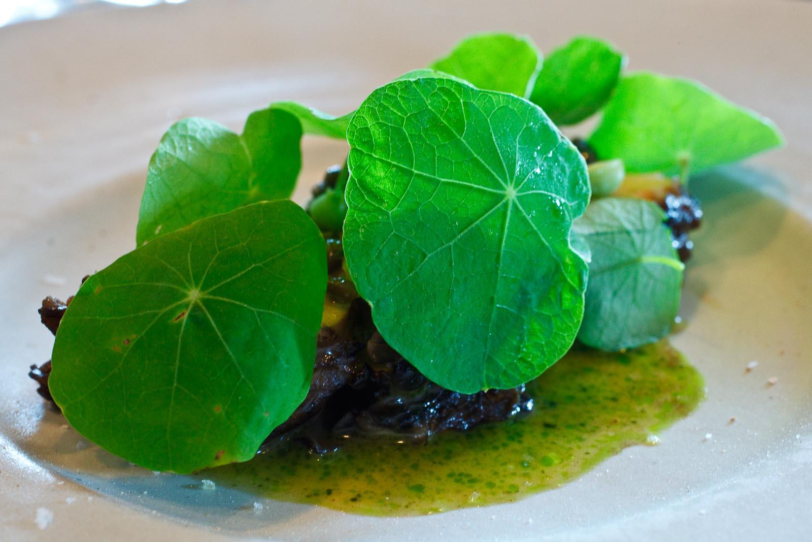 Noma - Local, wild mushroom (Pied de boeuf-Amador); Skate sauce, nasturtium, elderberry capers