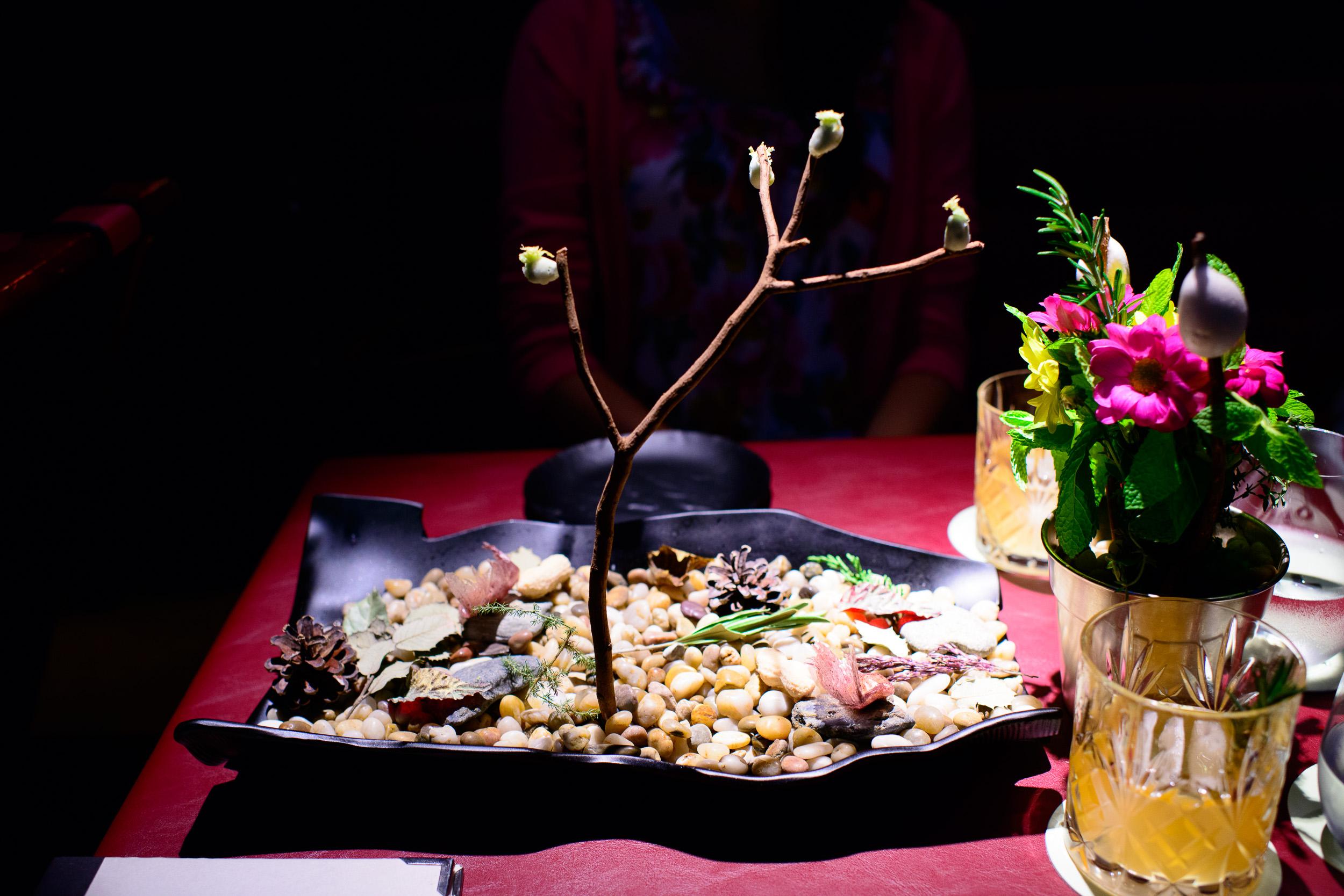 Burlesque, arbol de pistachio, hoja de otoño, cacahuete de miel
