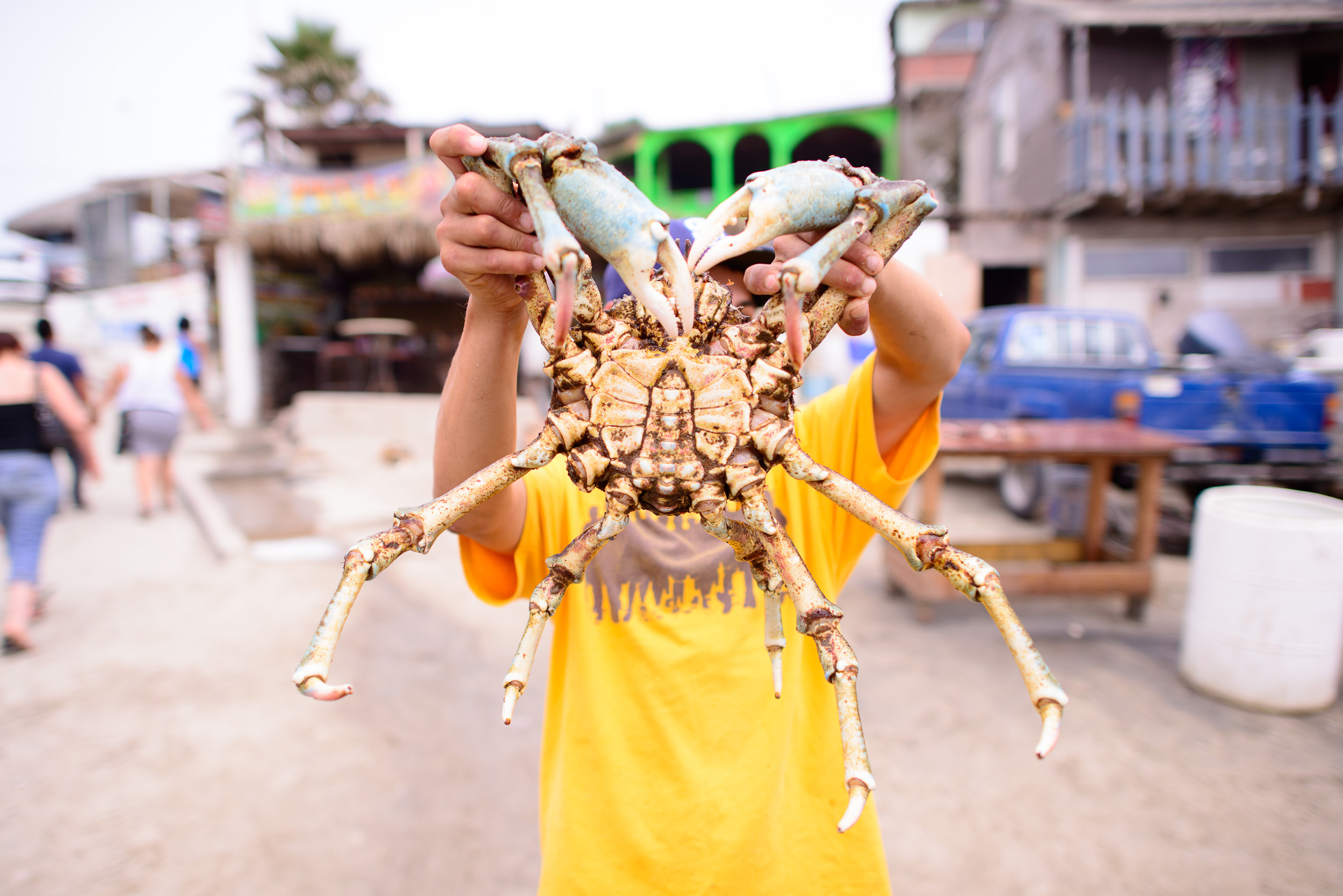 Spider crab, this is our guy
