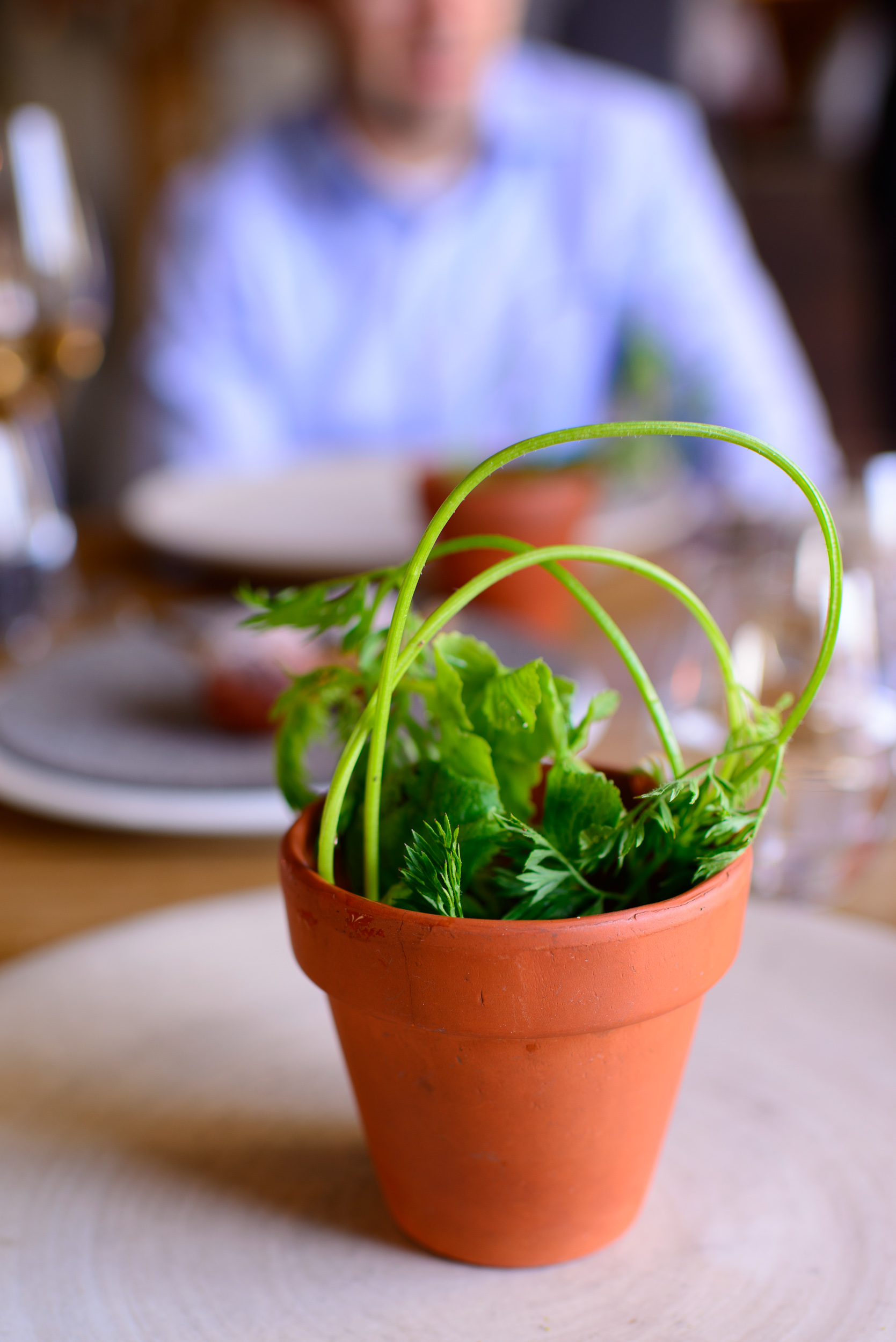 14th Course: Radish, soil, and grass