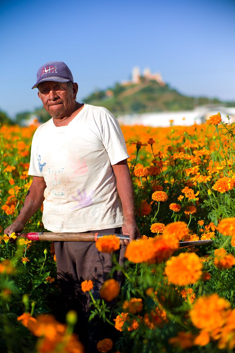 Sembrador de Cempazuchitl, Flor de Día de Muertos