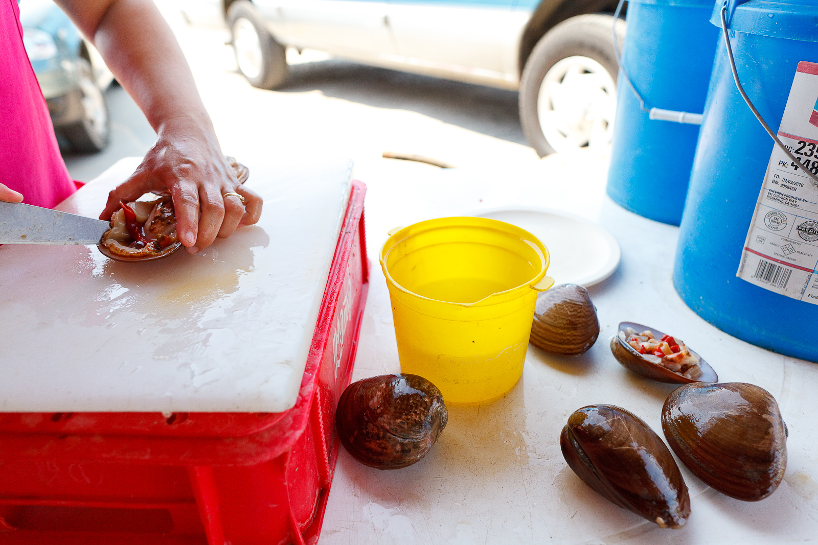 Shucking almejas chocolatas (chocolate clams)