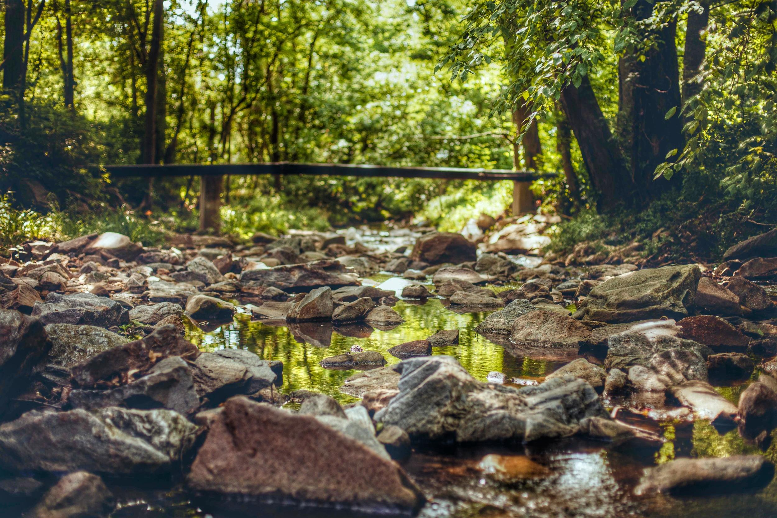 A creek running through the Botanical Gardens.