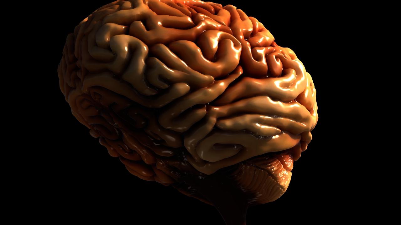 Brain WIP 17.jpeg