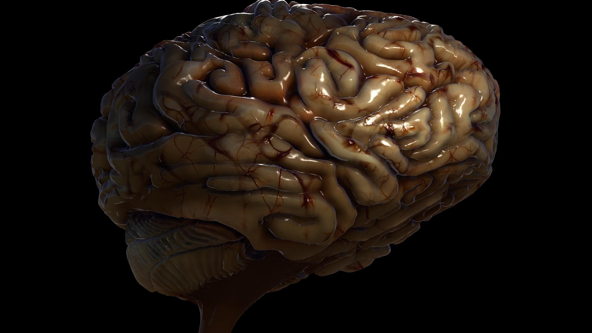 Brain WIP 23.jpeg
