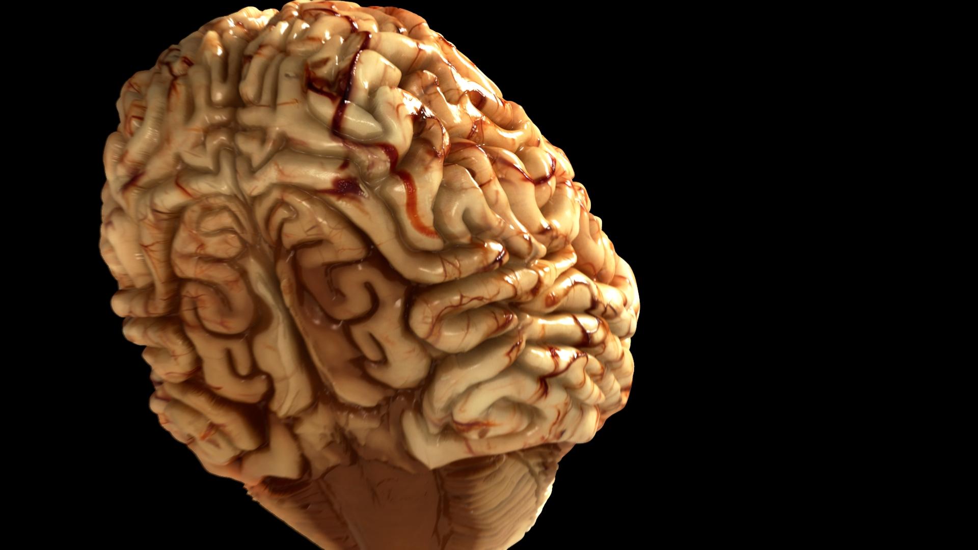Brain WIP 25.jpeg