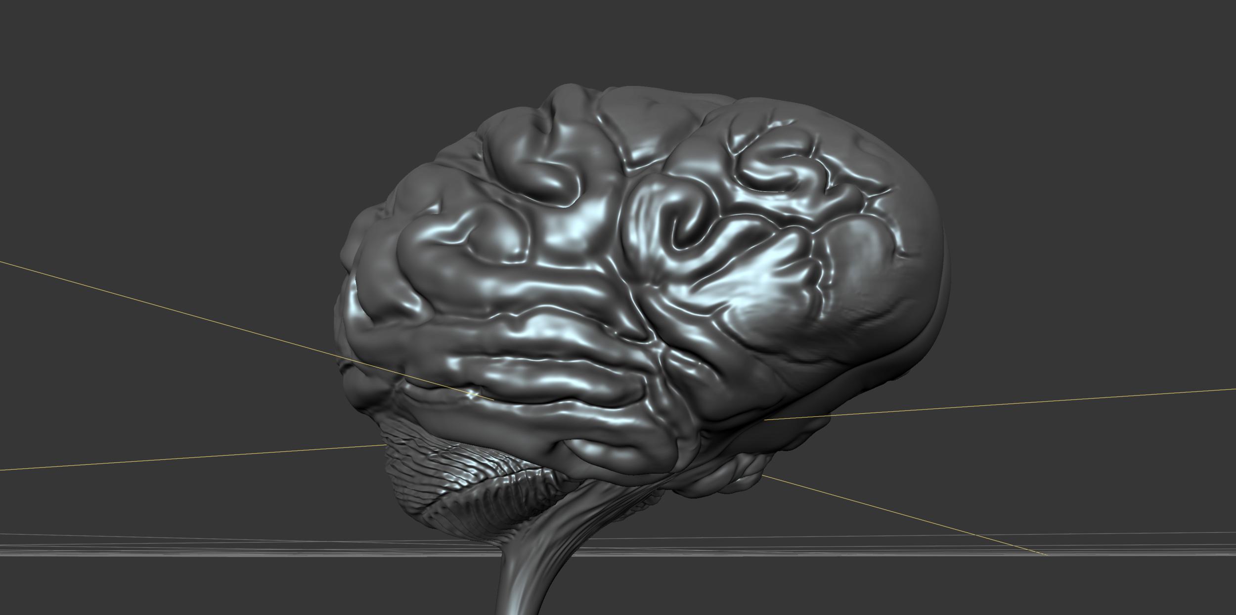 Brain Sculpt WIP1.png