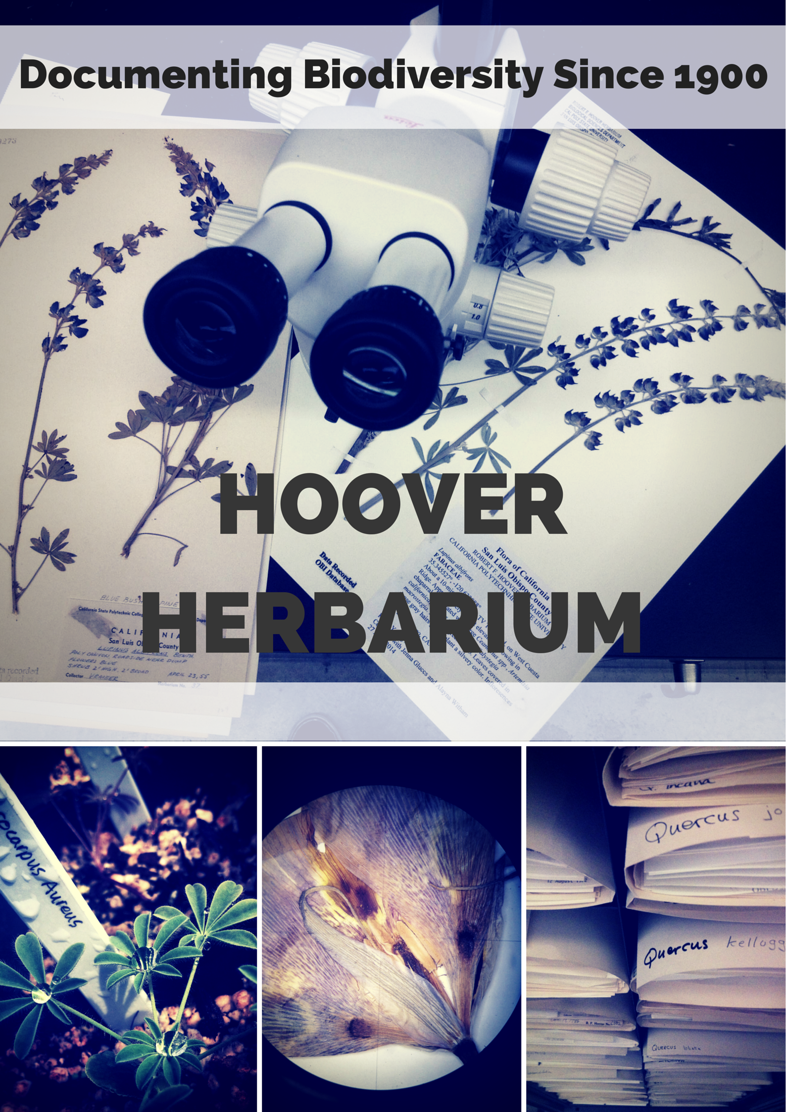 My herbarium poster design